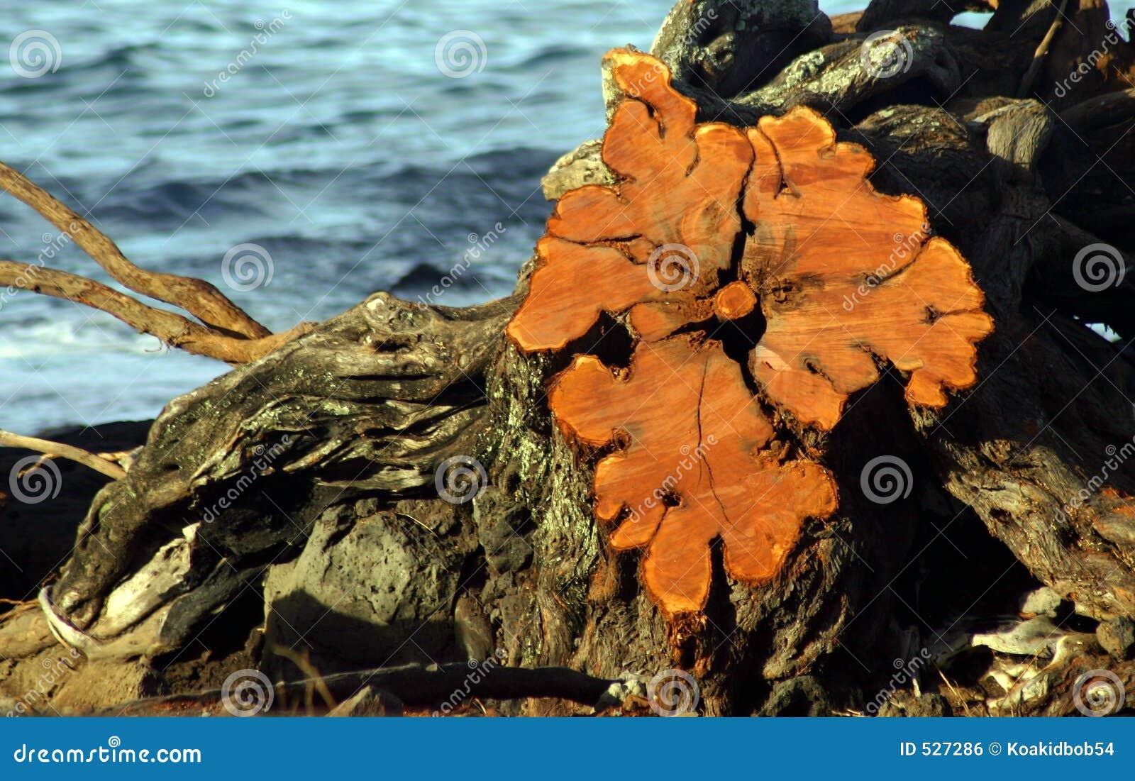 Download 节夏威夷海岛映射 库存照片. 图片 包括有 旅行, 海边, 异常, 机会, 本质, 复制品, 漂流木头, 怪异 - 527286