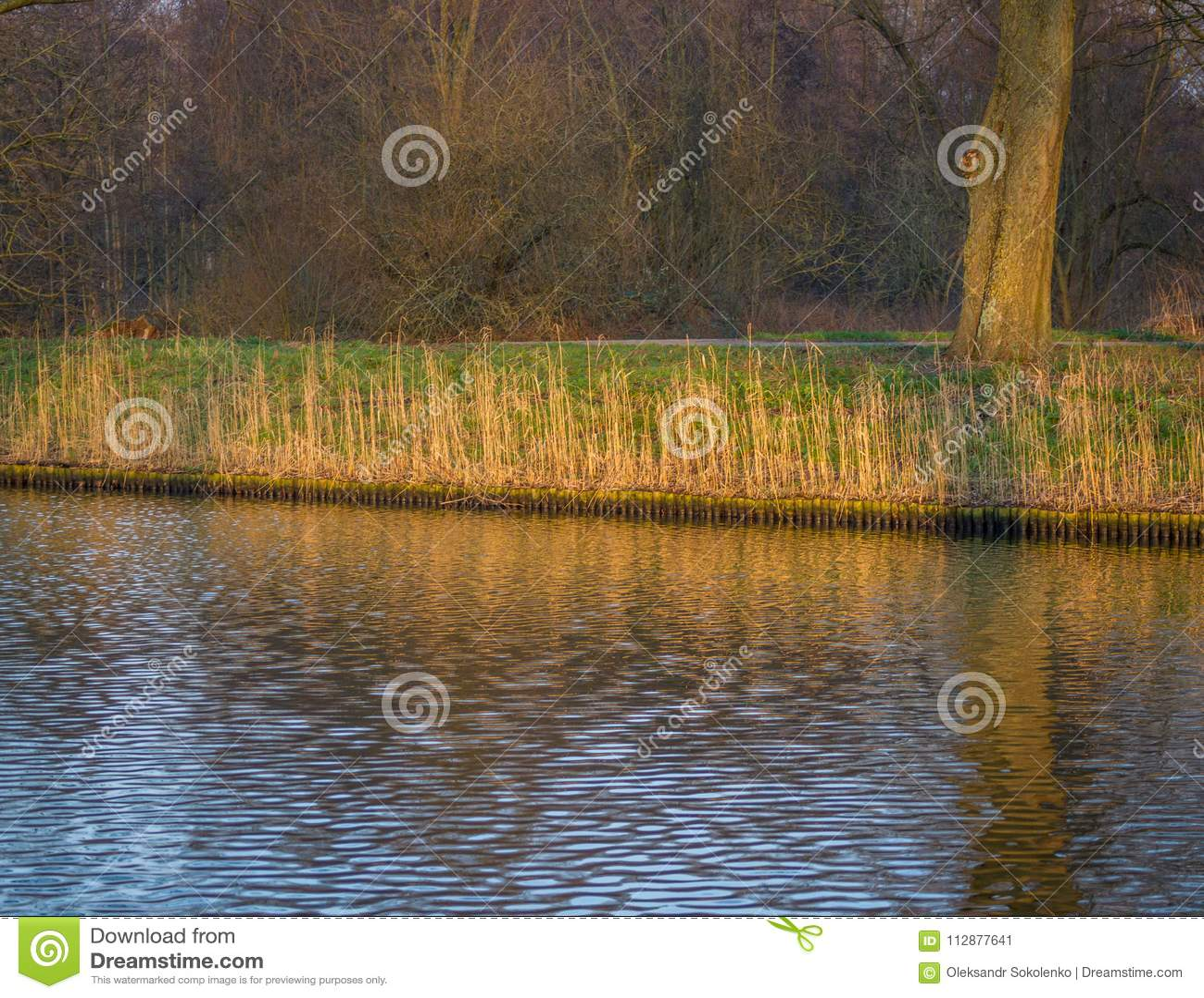 芦苇附加费用的特写镜头在从水看到的秋天颜色的