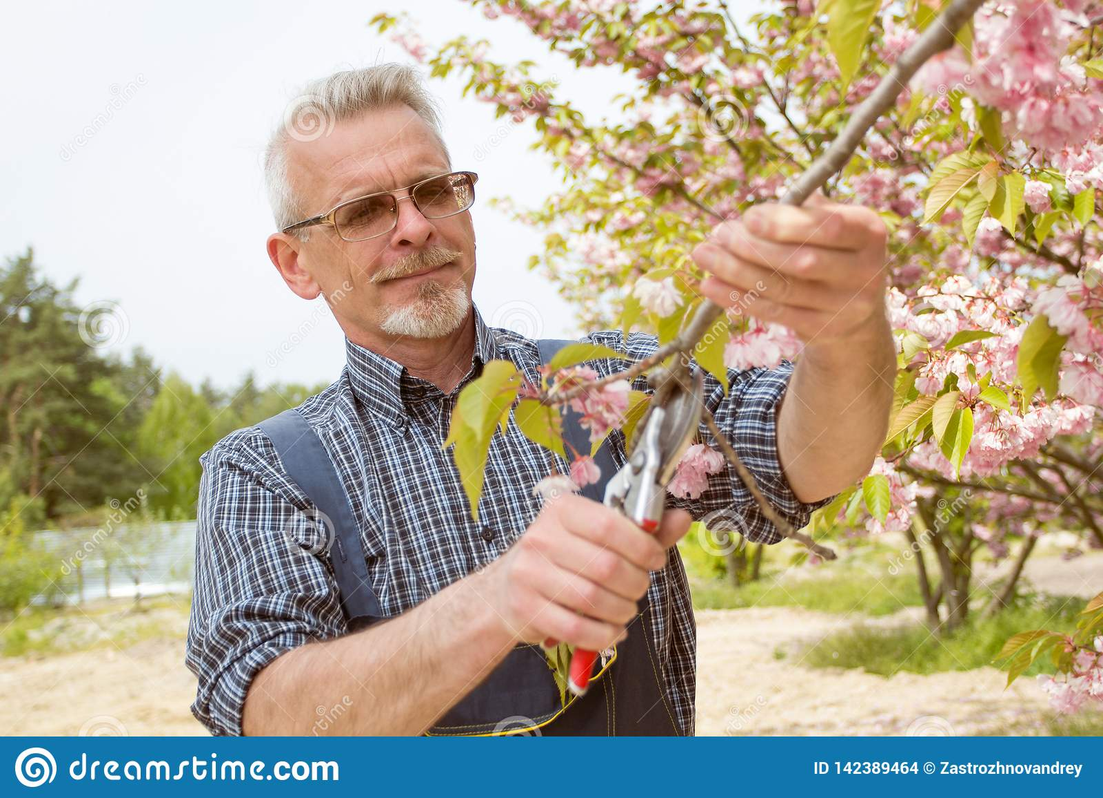 花匠削减一棵开花的树的分支