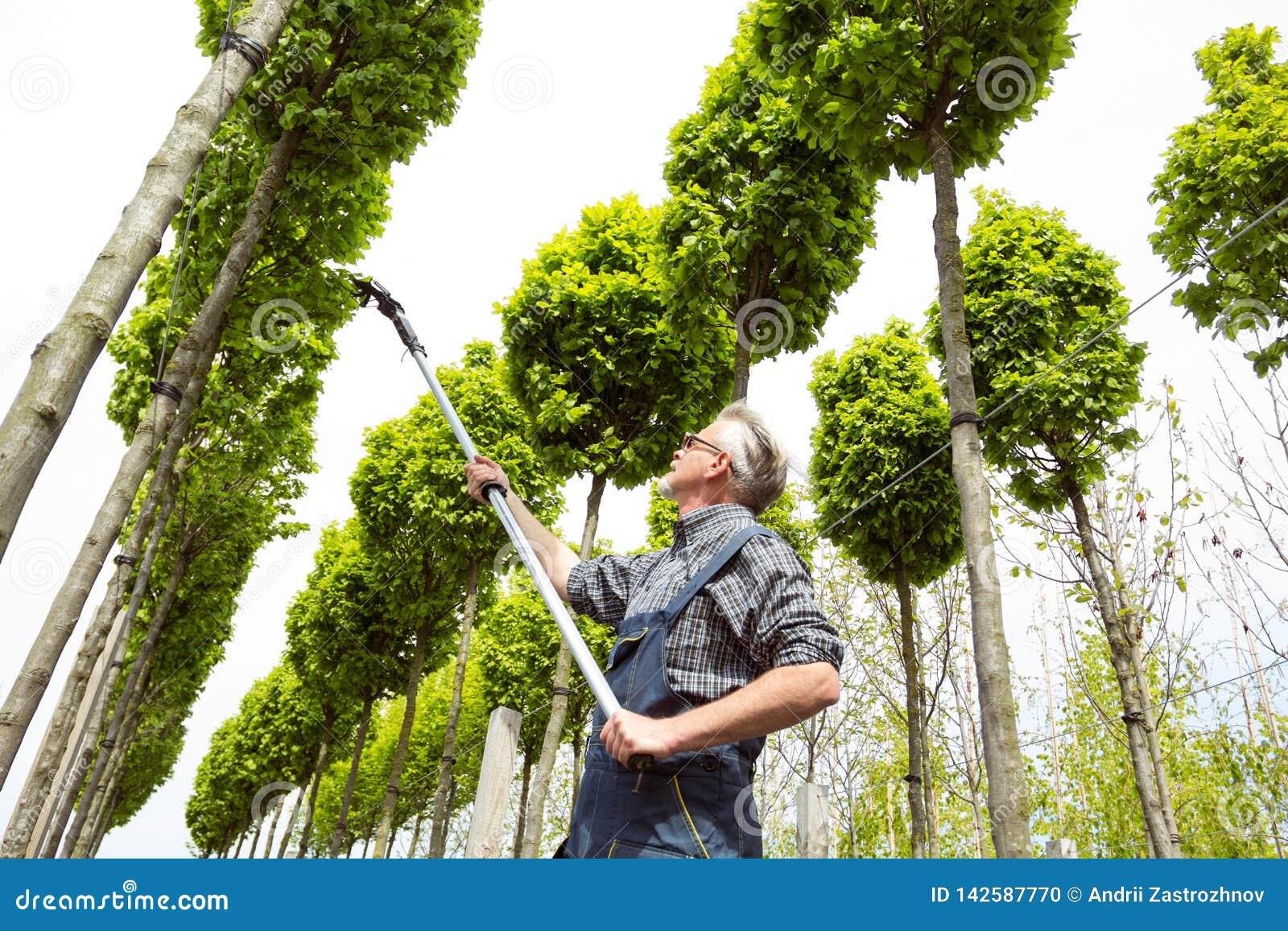 花匠照料年轻树