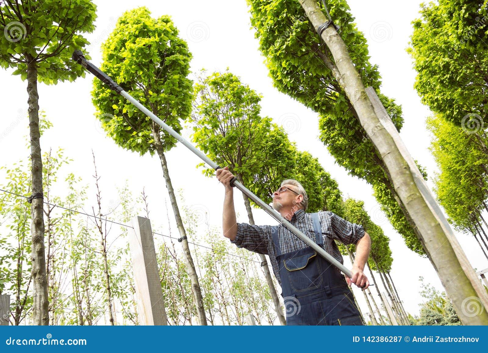 花匠砍高大的树木