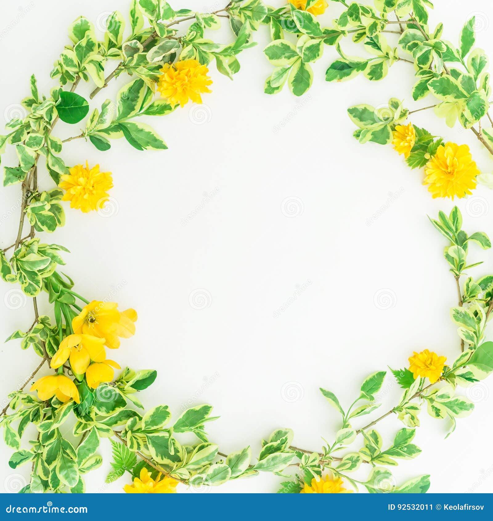 花卉圆的框架由与叶子和黄色花的分支做成在白色背景 平的位置,顶视图