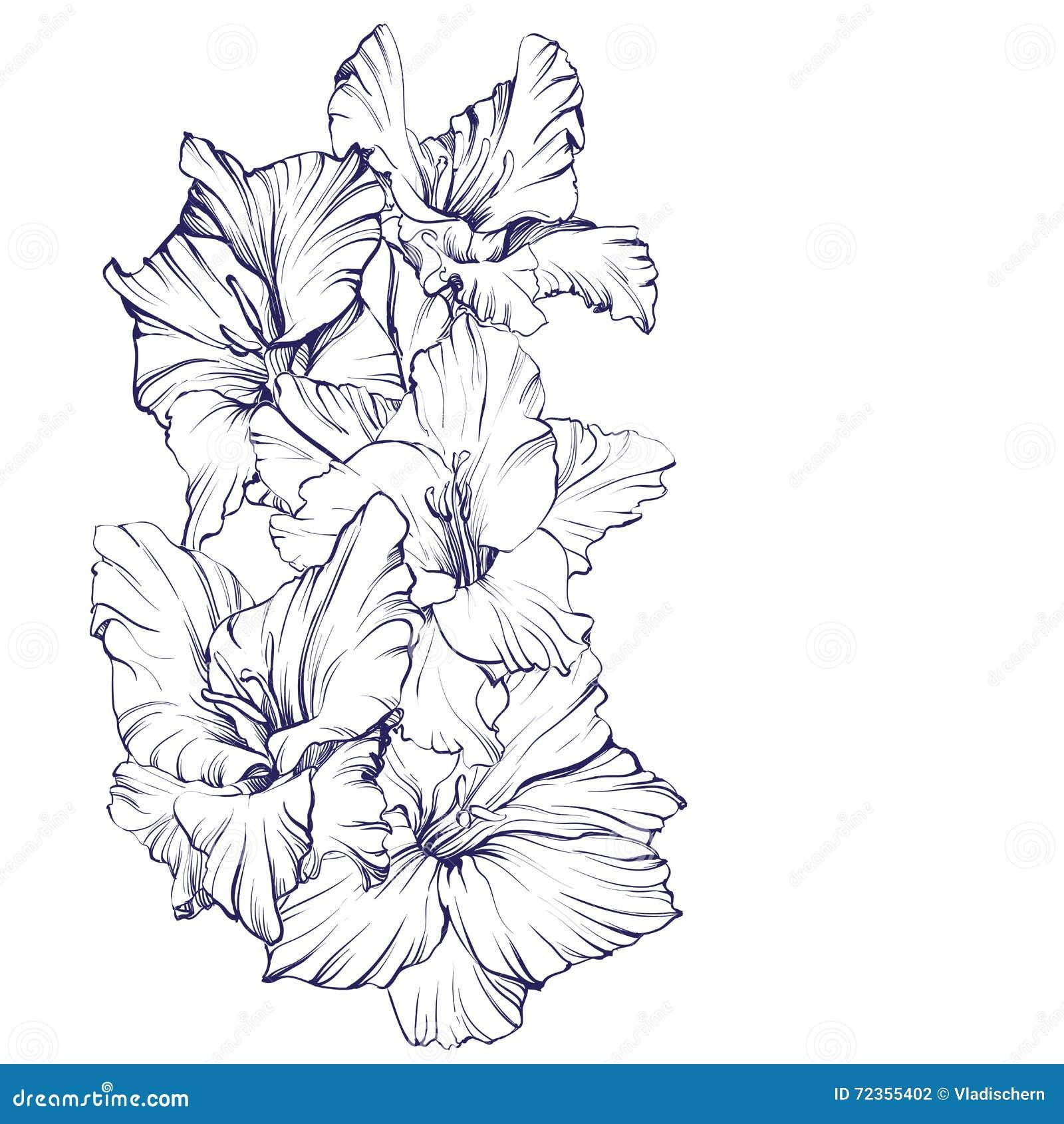 花卉开花的剑兰手拉的传染媒介例证
