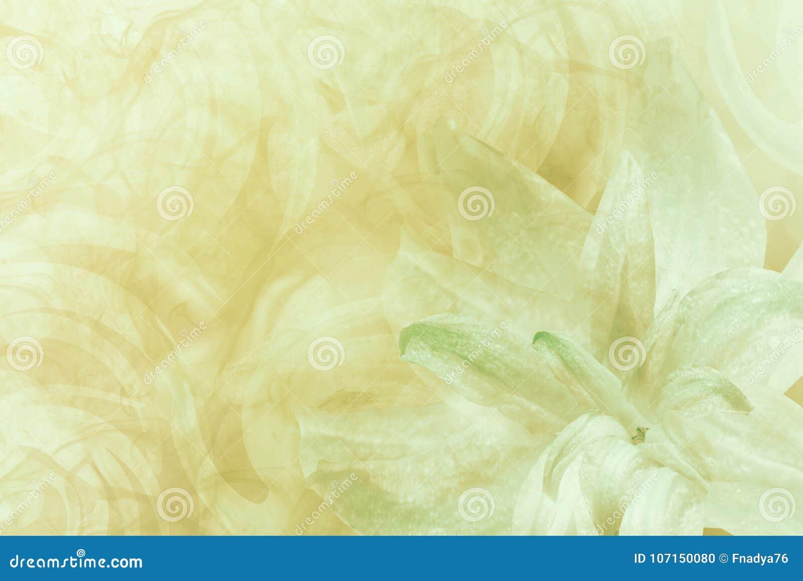 花卉抽象轻的绿色-白黄色背景 百合的瓣在白绿的冷淡的背景开花 特写镜头 流