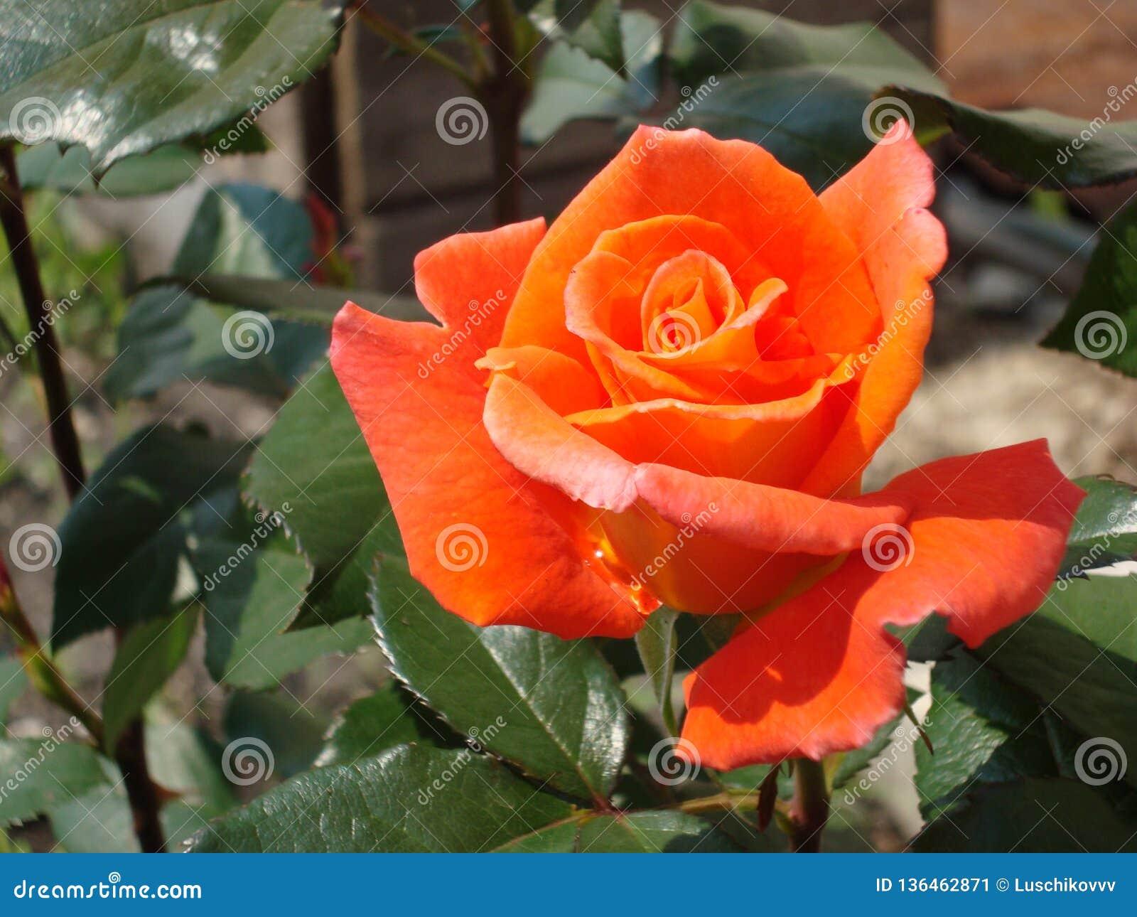 花在庭院里