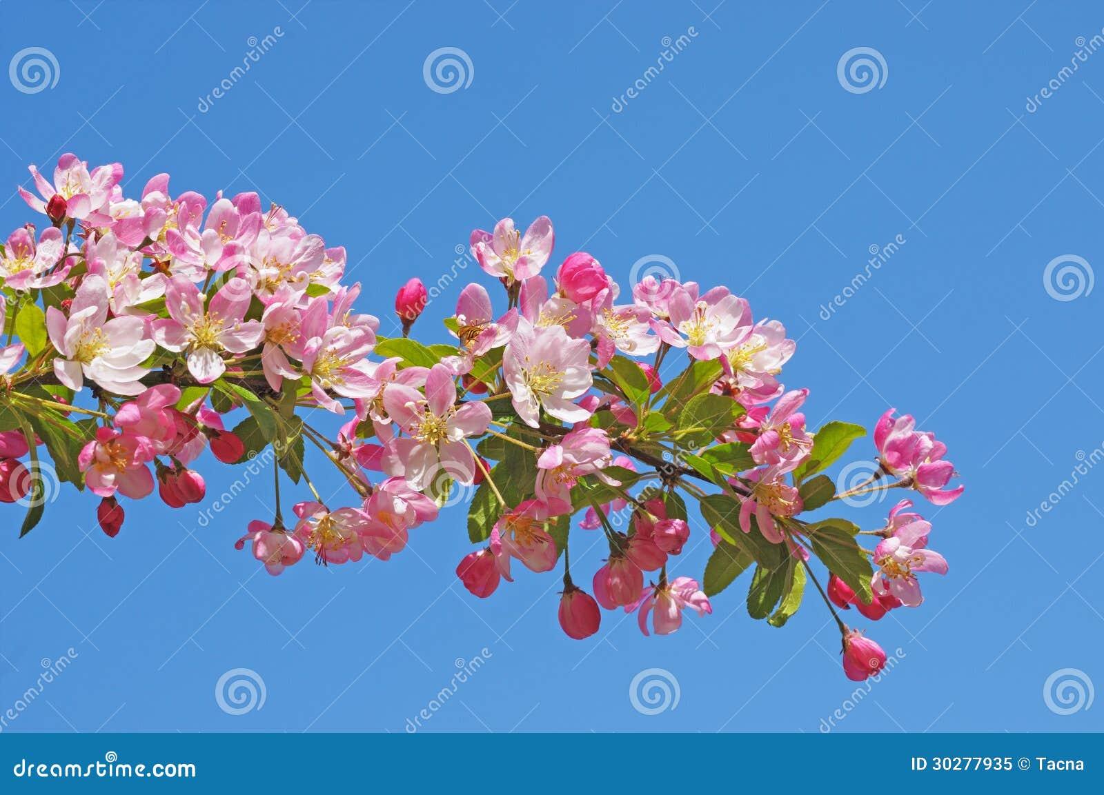 花在果树园