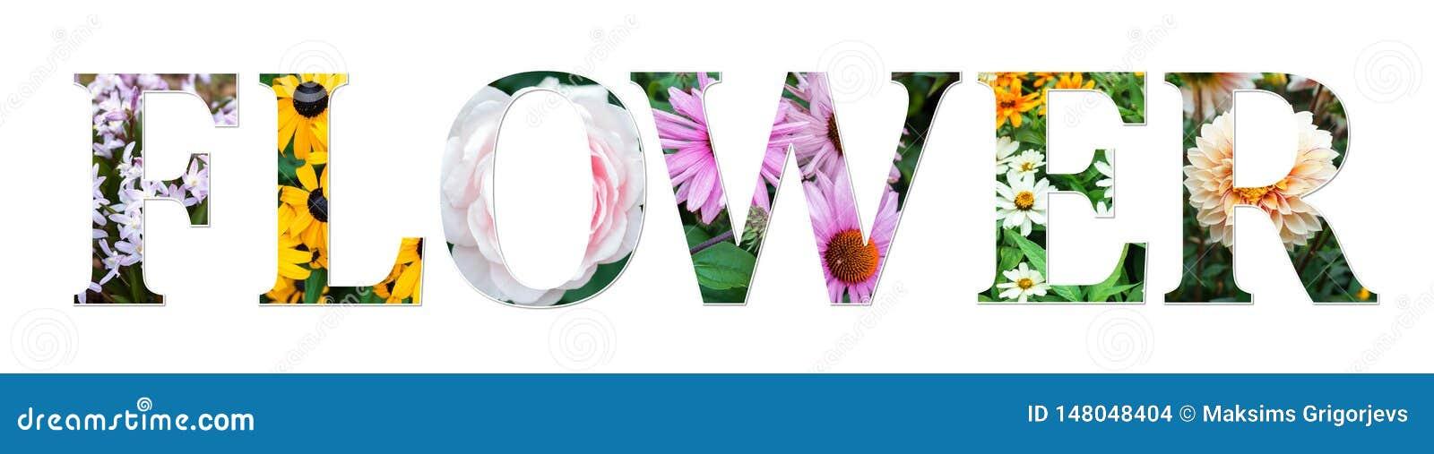 花拼贴画标志做了真正的花卉照片 植物的字体