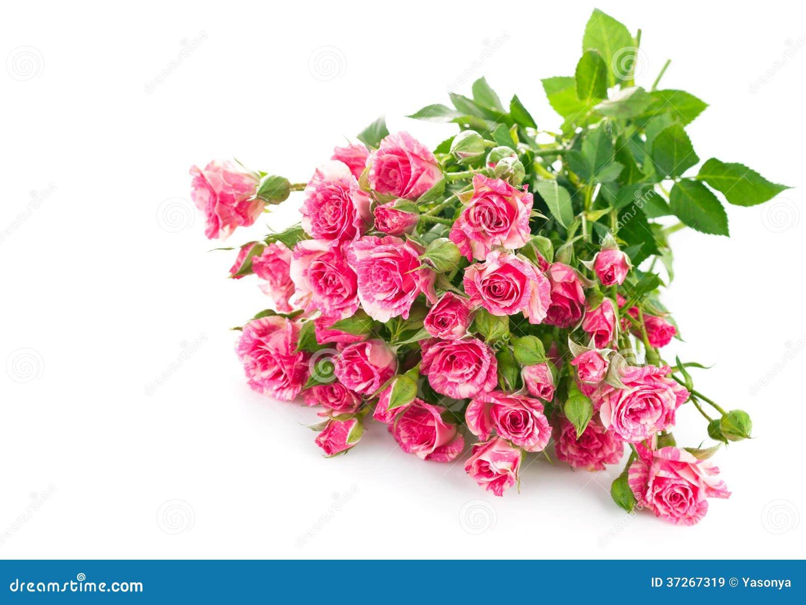 花束与绿色叶子的桃红色玫瑰