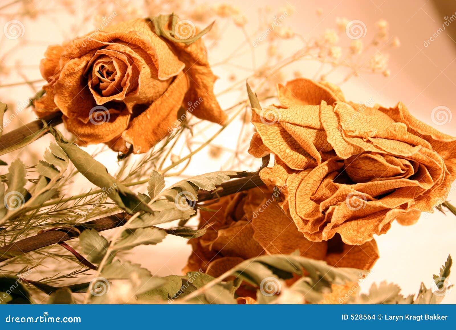 Download 花束干玫瑰 库存照片. 图片 包括有 龙舌兰, 上升了, 华伦泰, 花束, 保留, beauvoir, 词根 - 528564