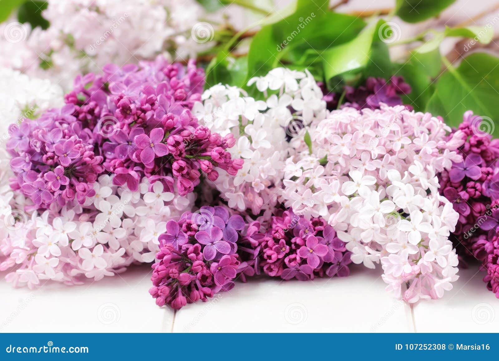 花束开花丁香
