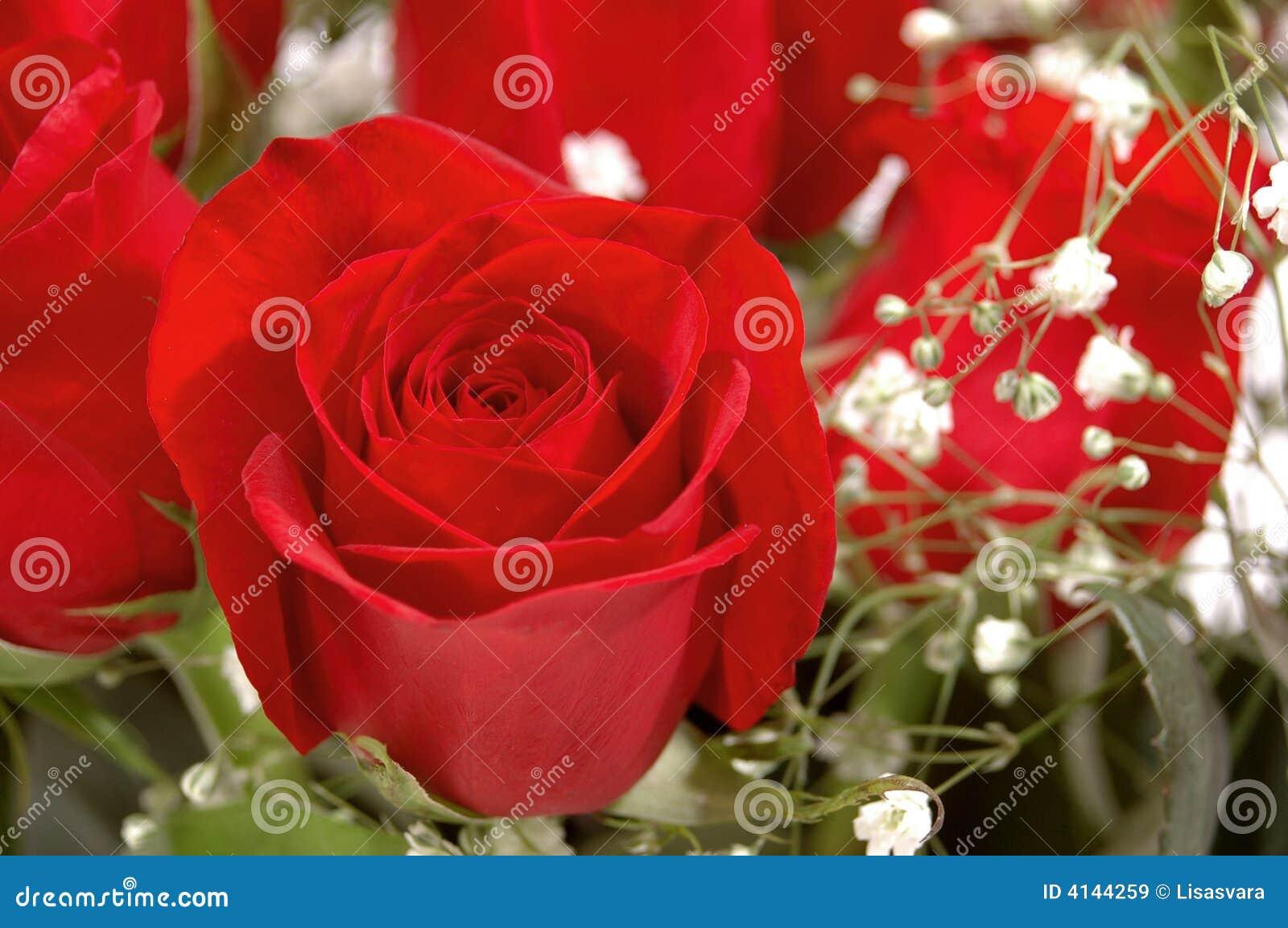 花束红色上升了