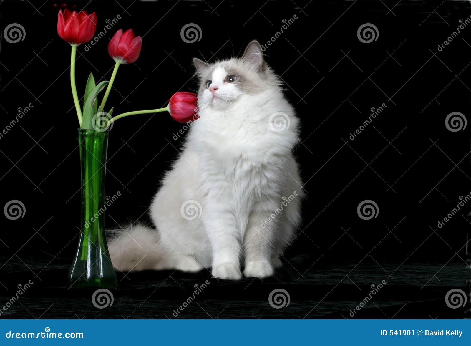 Download 花气味 库存图片. 图片 包括有 毛茸, 伴随, 似猫, 小猫, 郁金香, 宠物, 气味, 蓬松, 嬉戏 - 541901