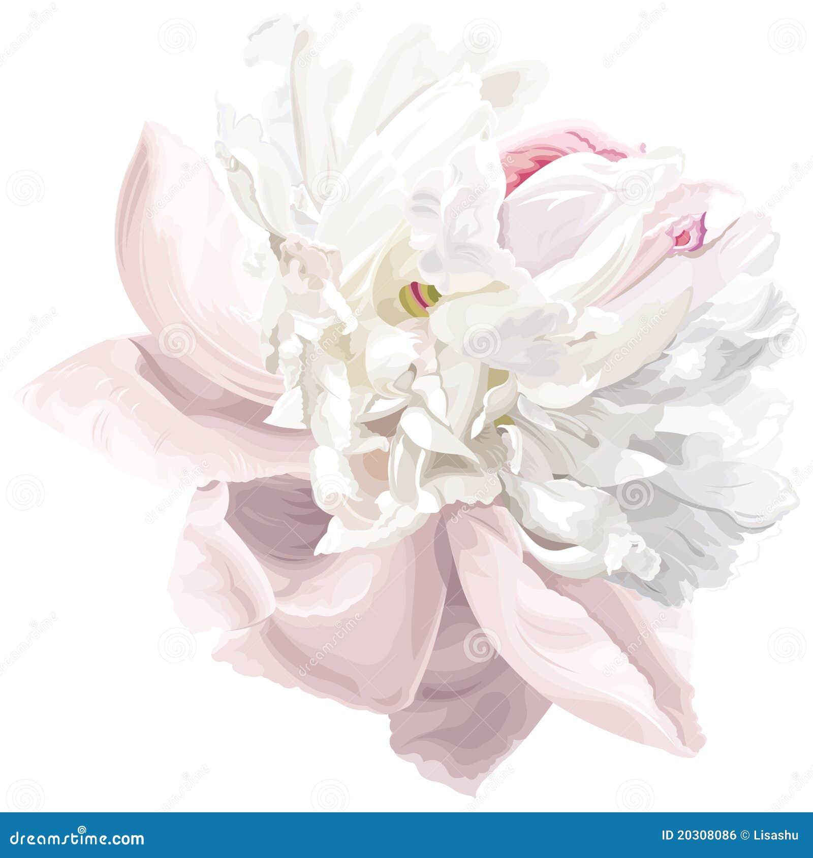 花牡丹白色