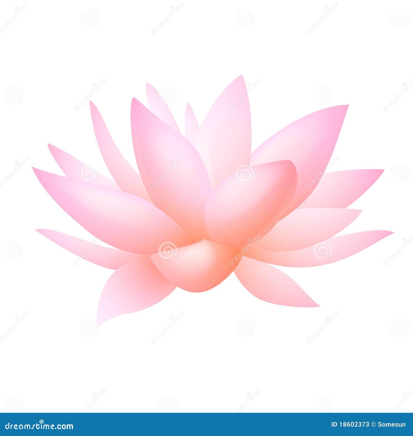 花百合莲花粉红色向量水