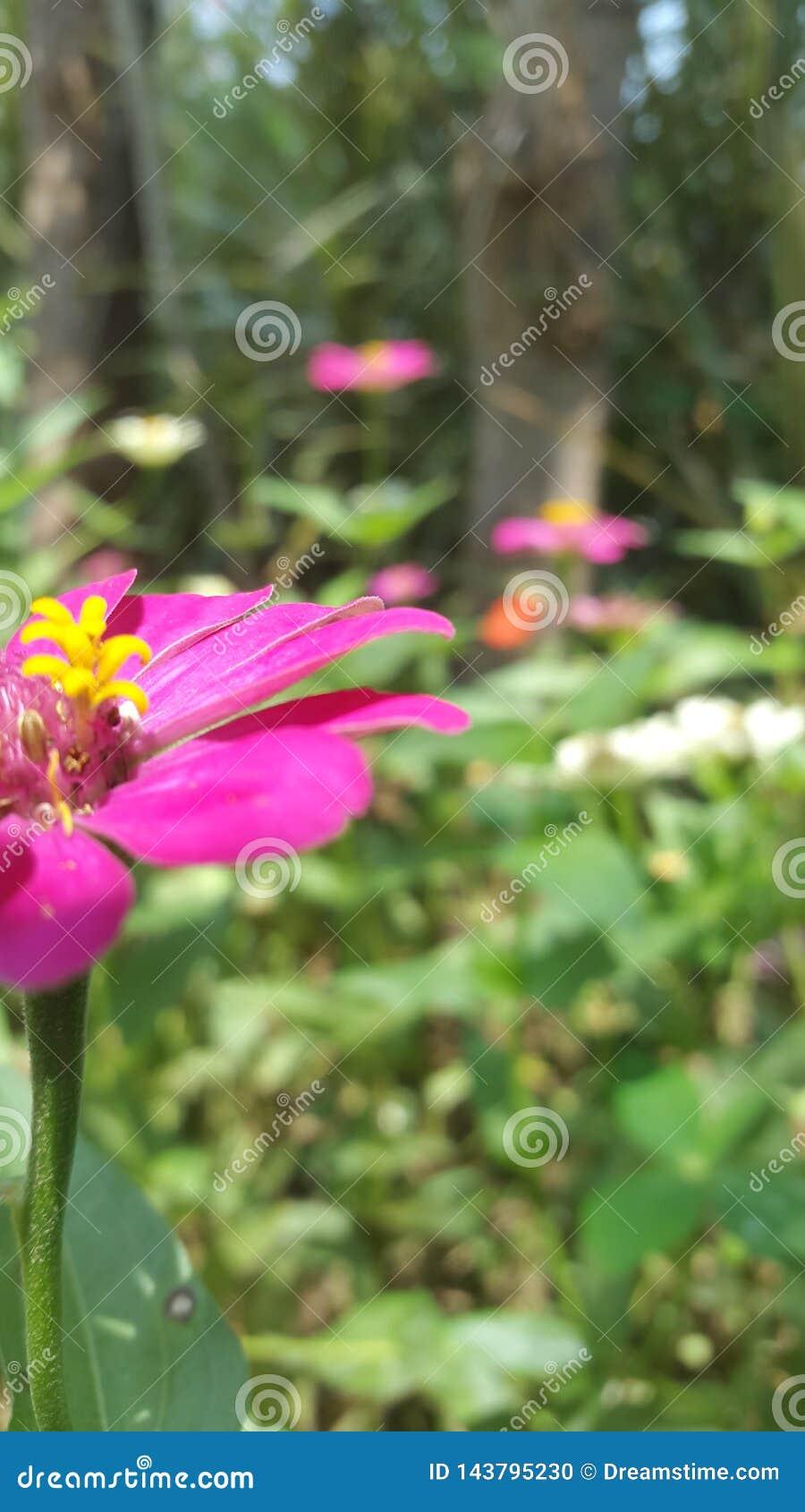 花的自然装饰给休息眼皮&头脑