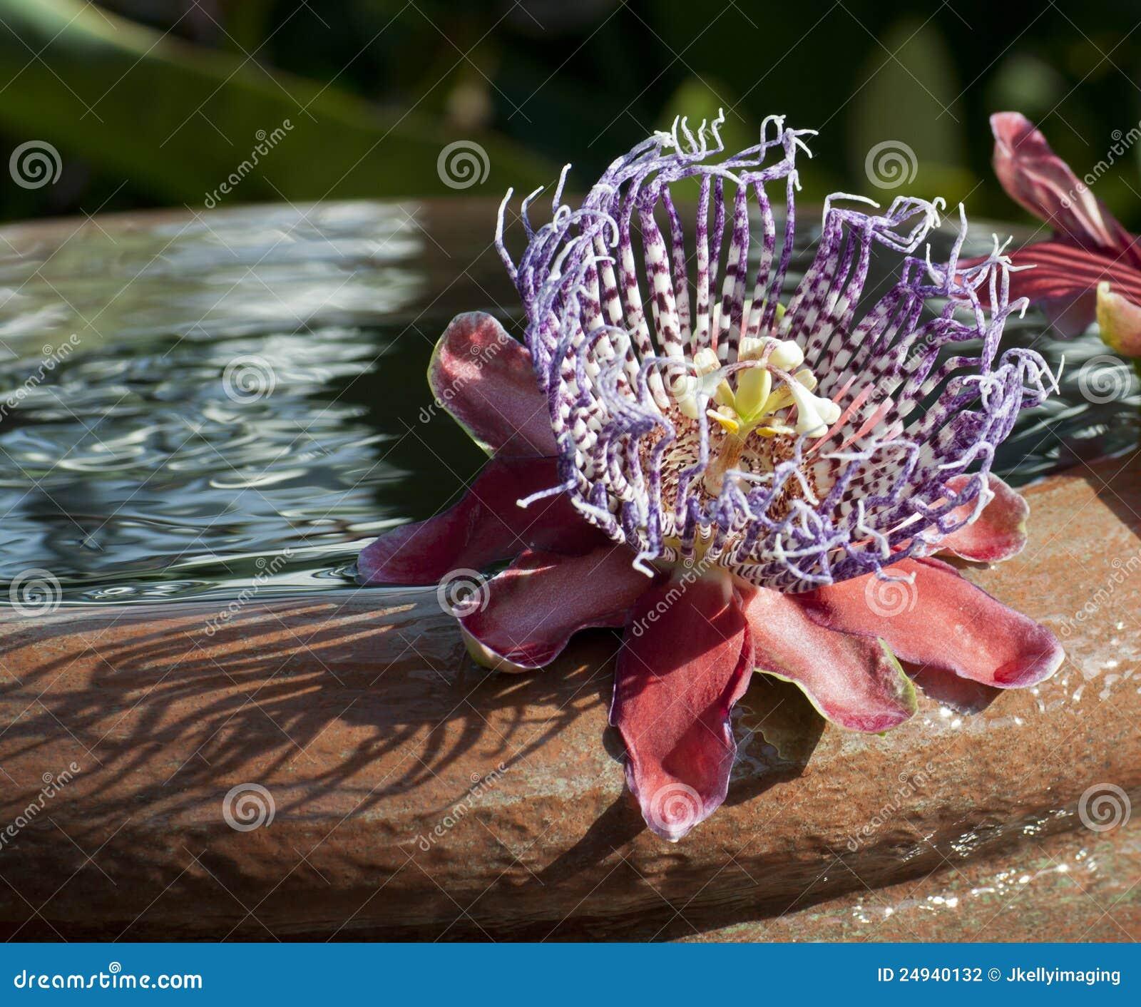 花盆少见水