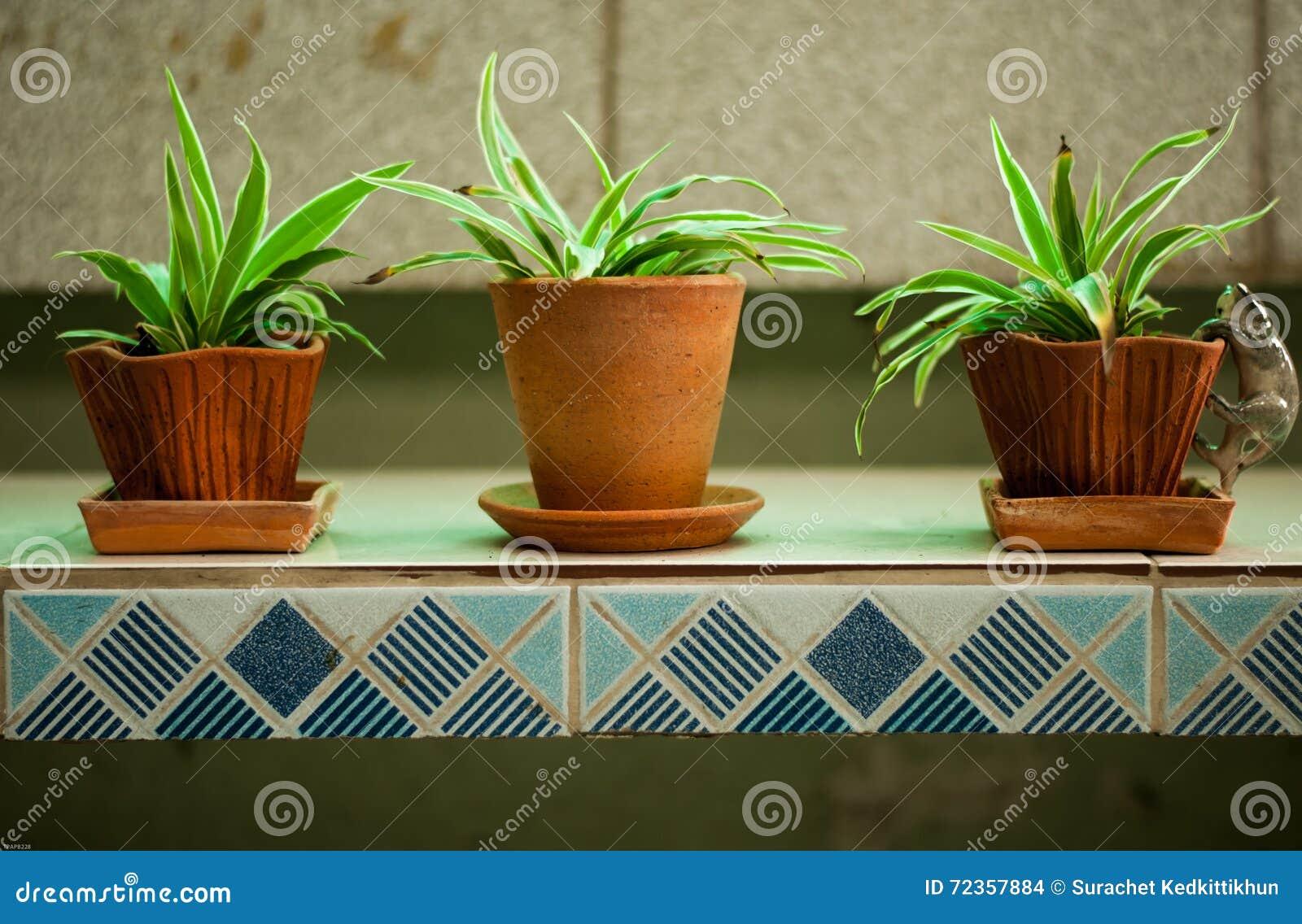 花盆的植物