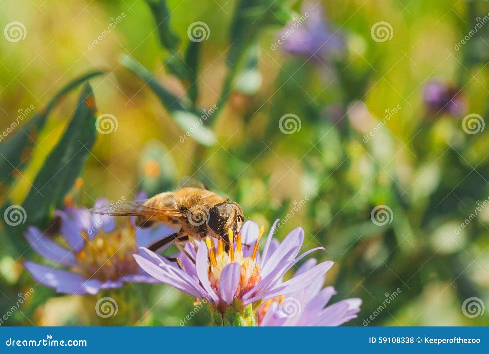 花粉盖了Hoverfly