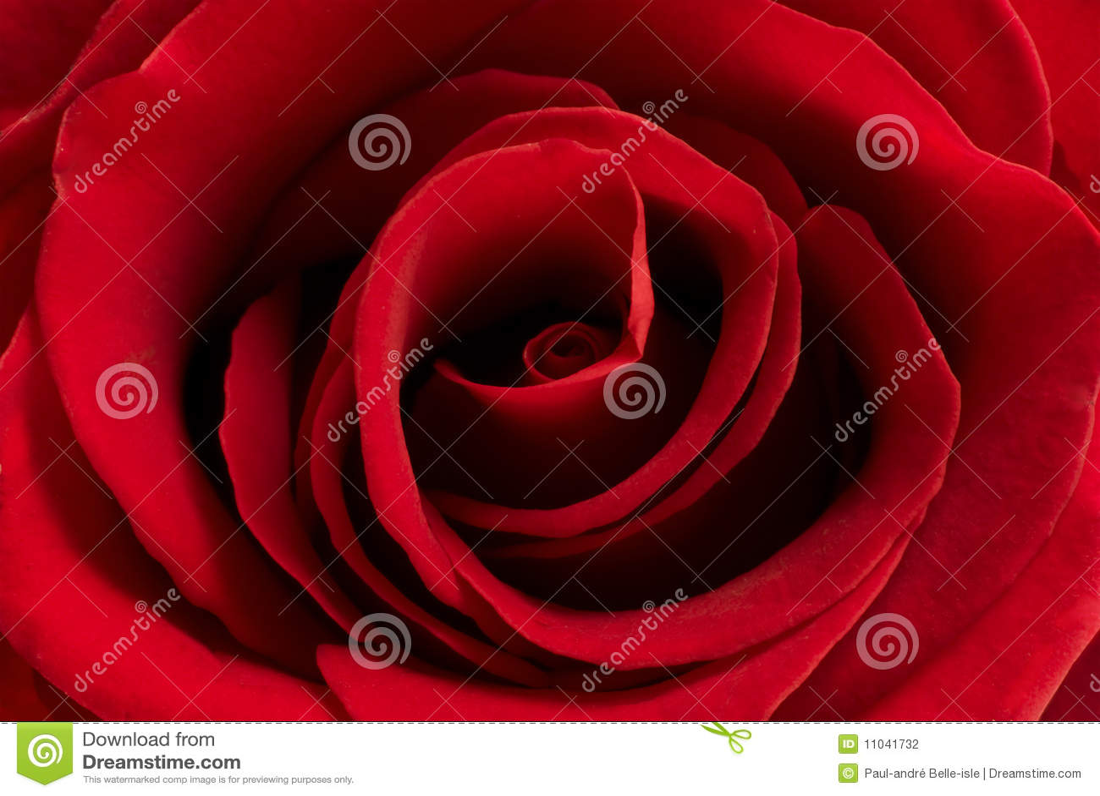 花红色上升了