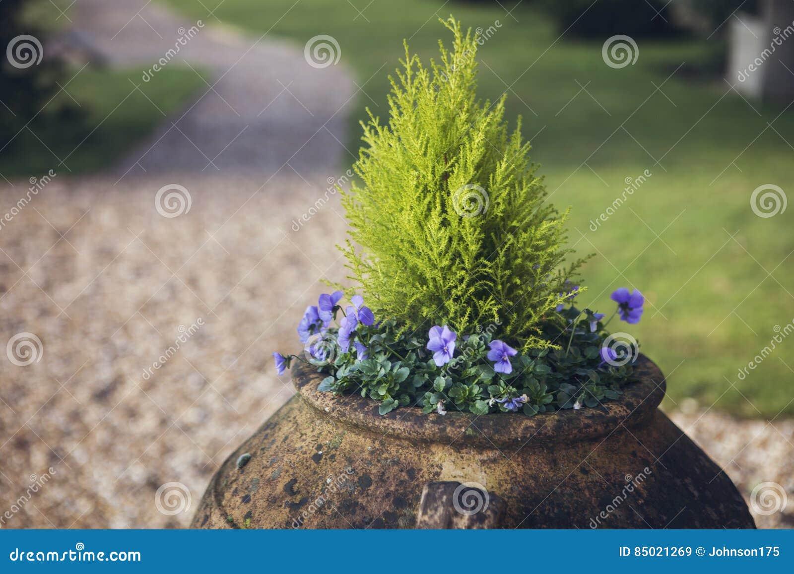 花缸在庭院里
