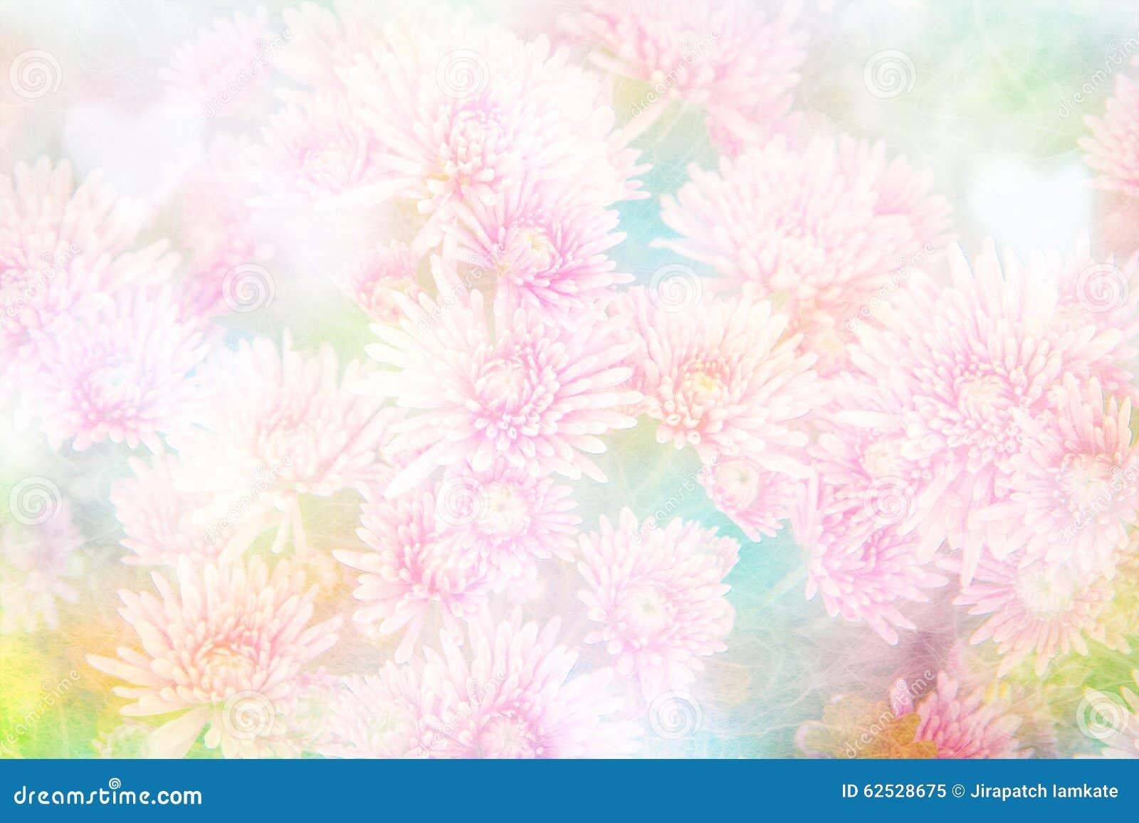 花背景的菊花