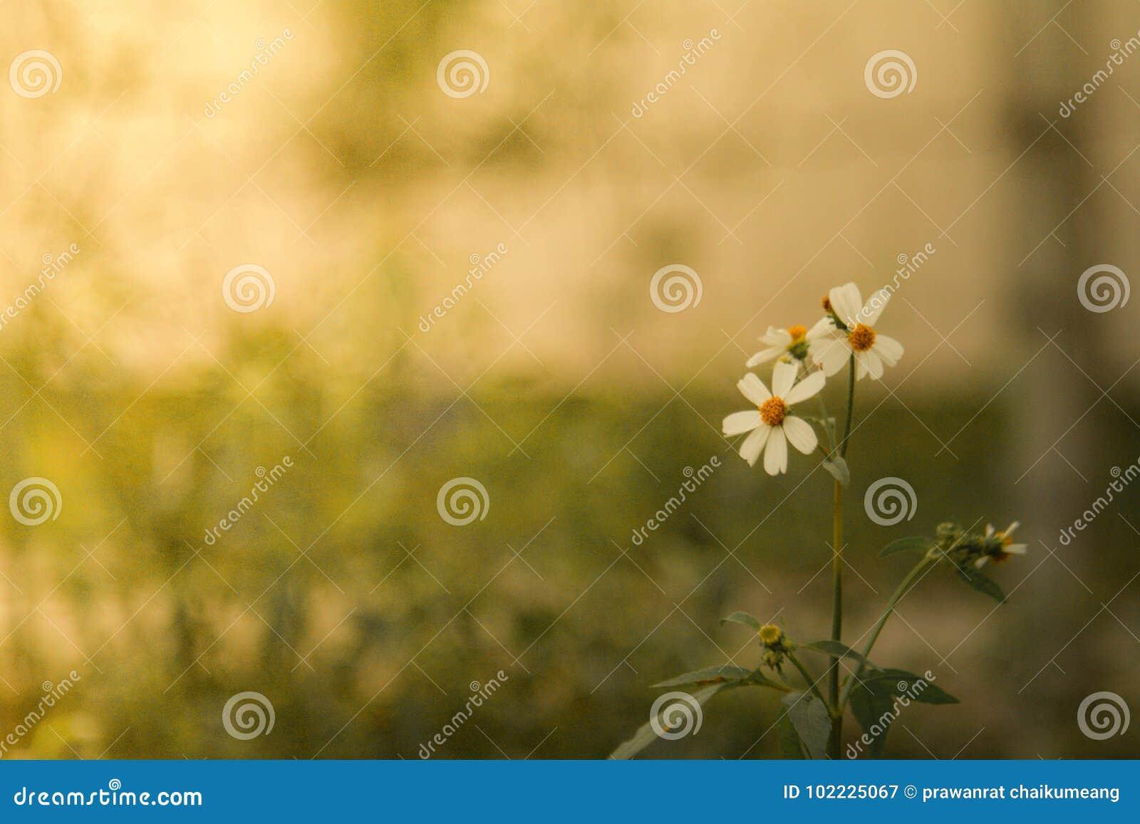 花草在软的颜色背景中
