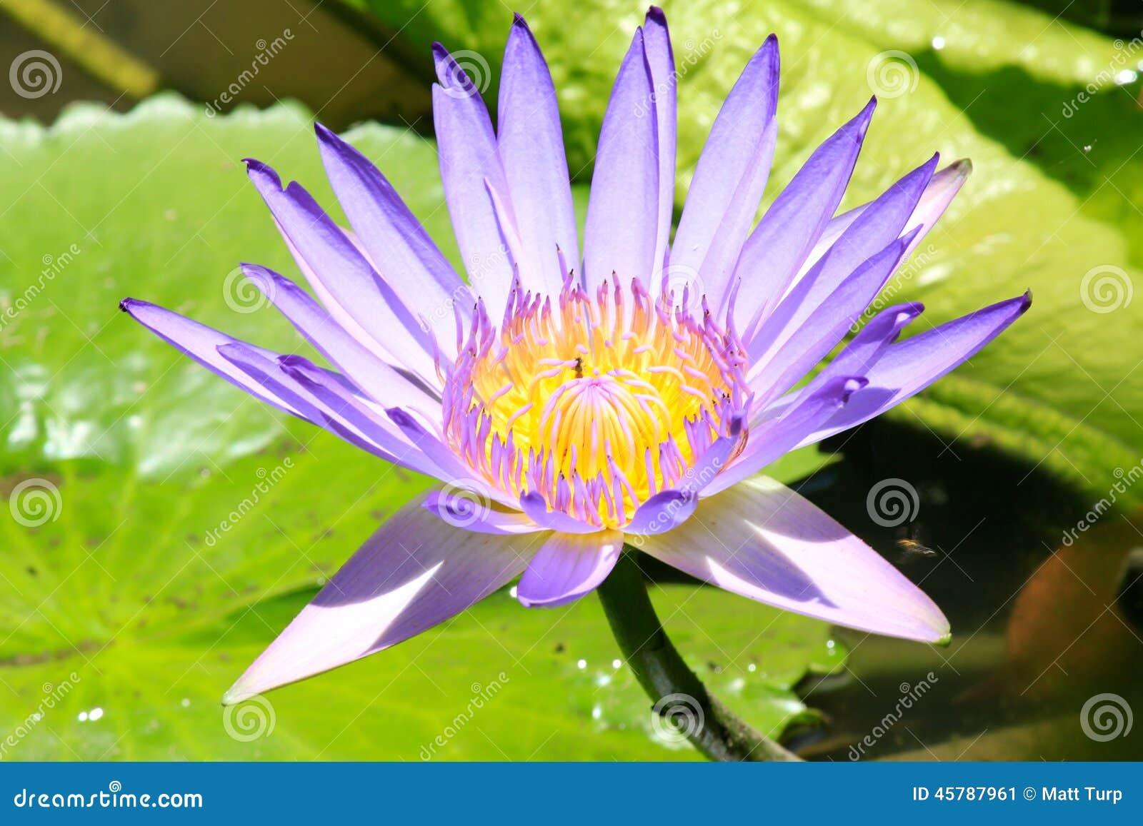 花蕾在里约热内卢植物园里