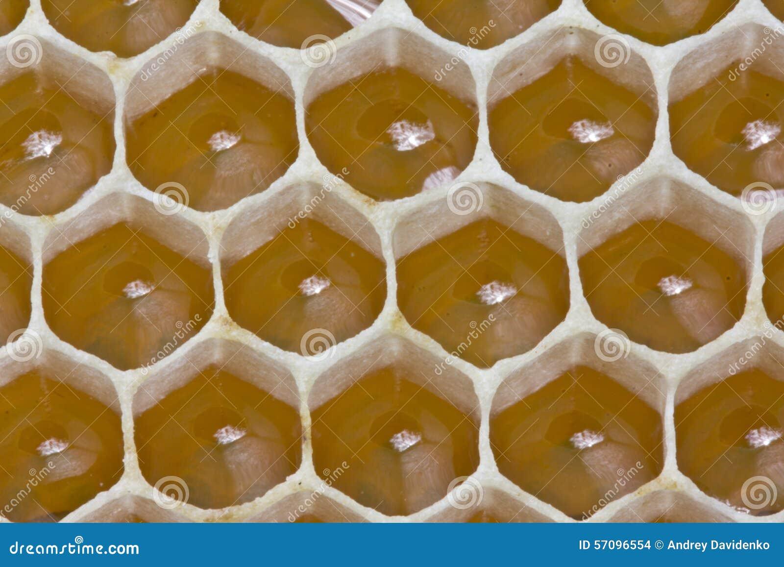 花蜜和蜂蜜在新的梳子