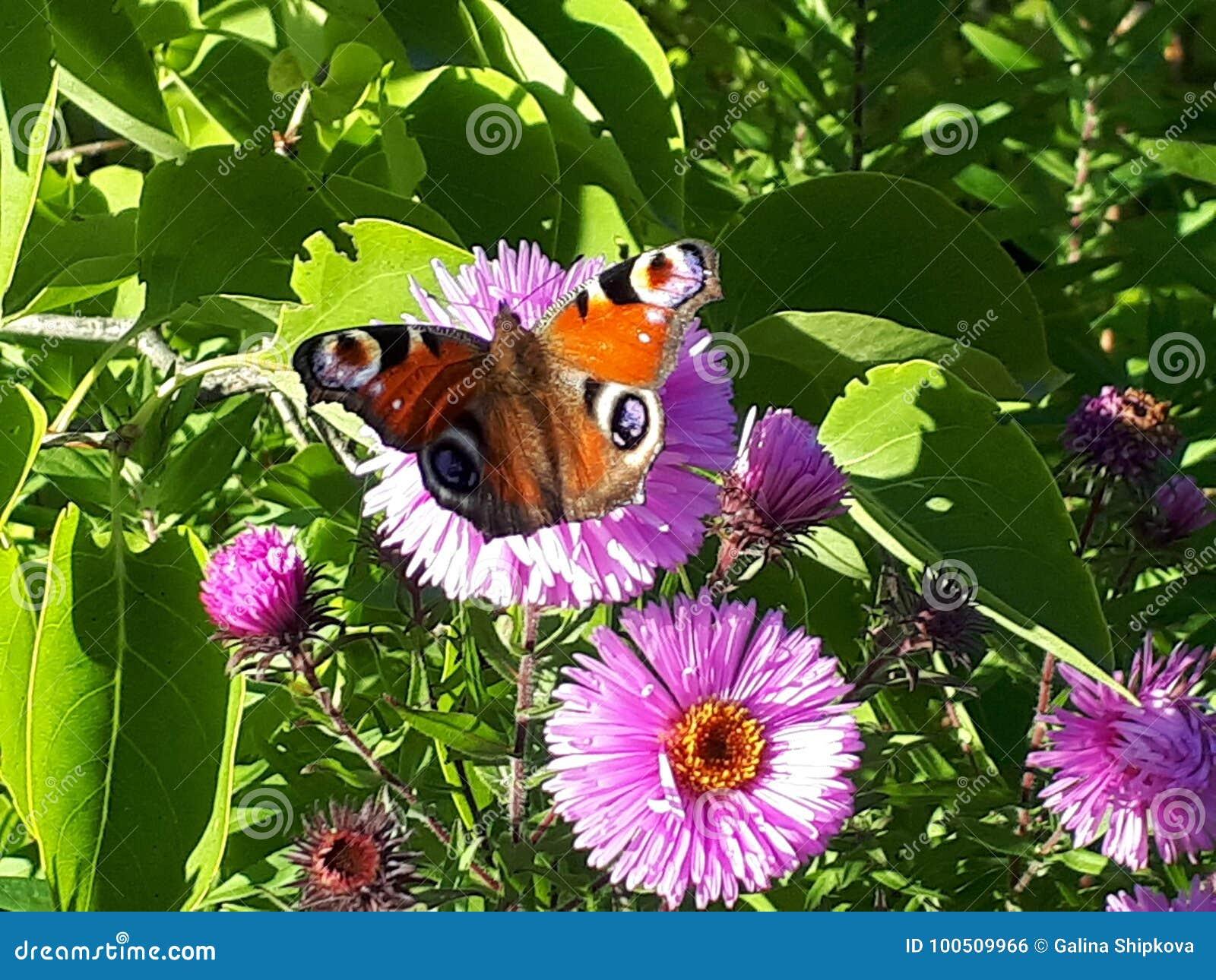 花 蝴蝶 秋天 绿色 眼睛