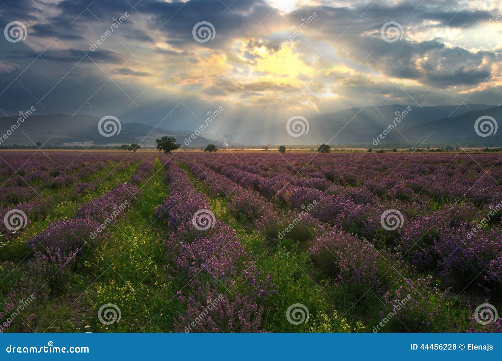 芳香域草本横向淡紫色工厂