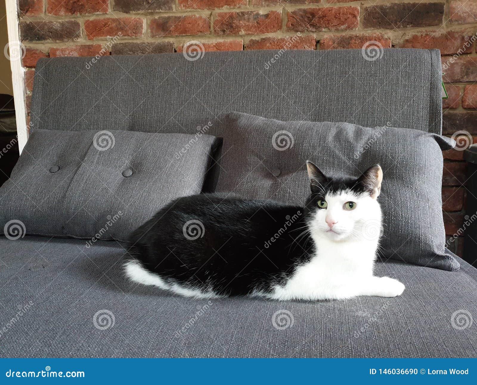英俊的似猫的朋友
