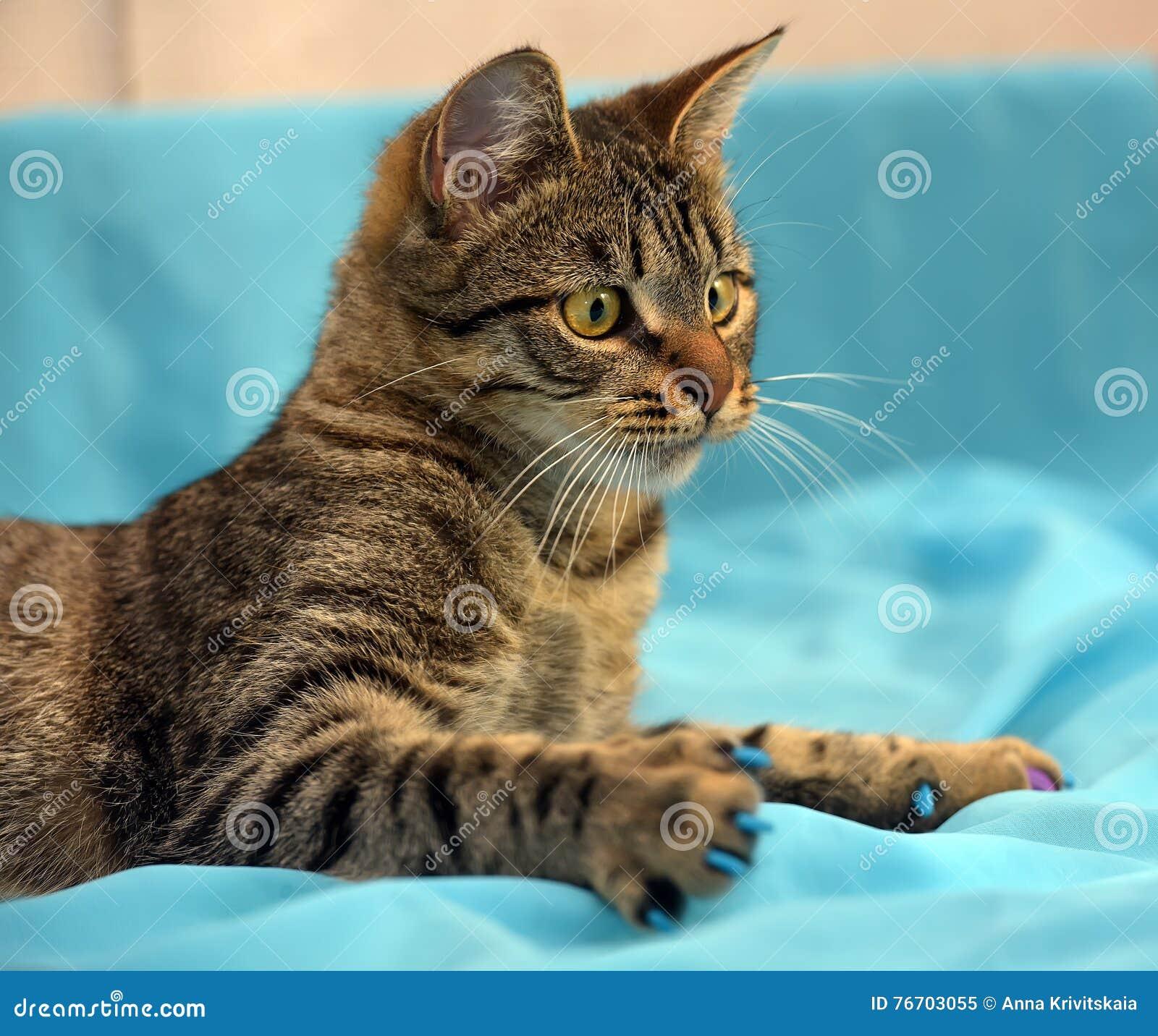 英俊的幼小虎斑猫