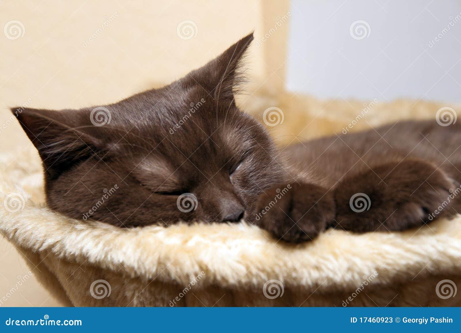 条记本休眠了怎样叫醒_手机休眠形态在哪设置_休眠