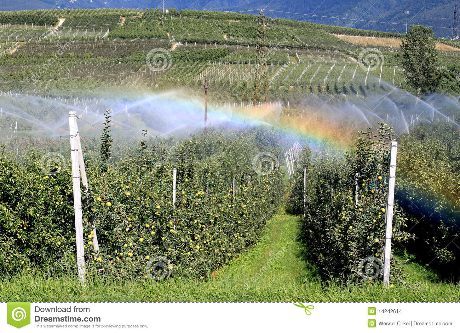 苹果灌溉意大利果树园彩虹