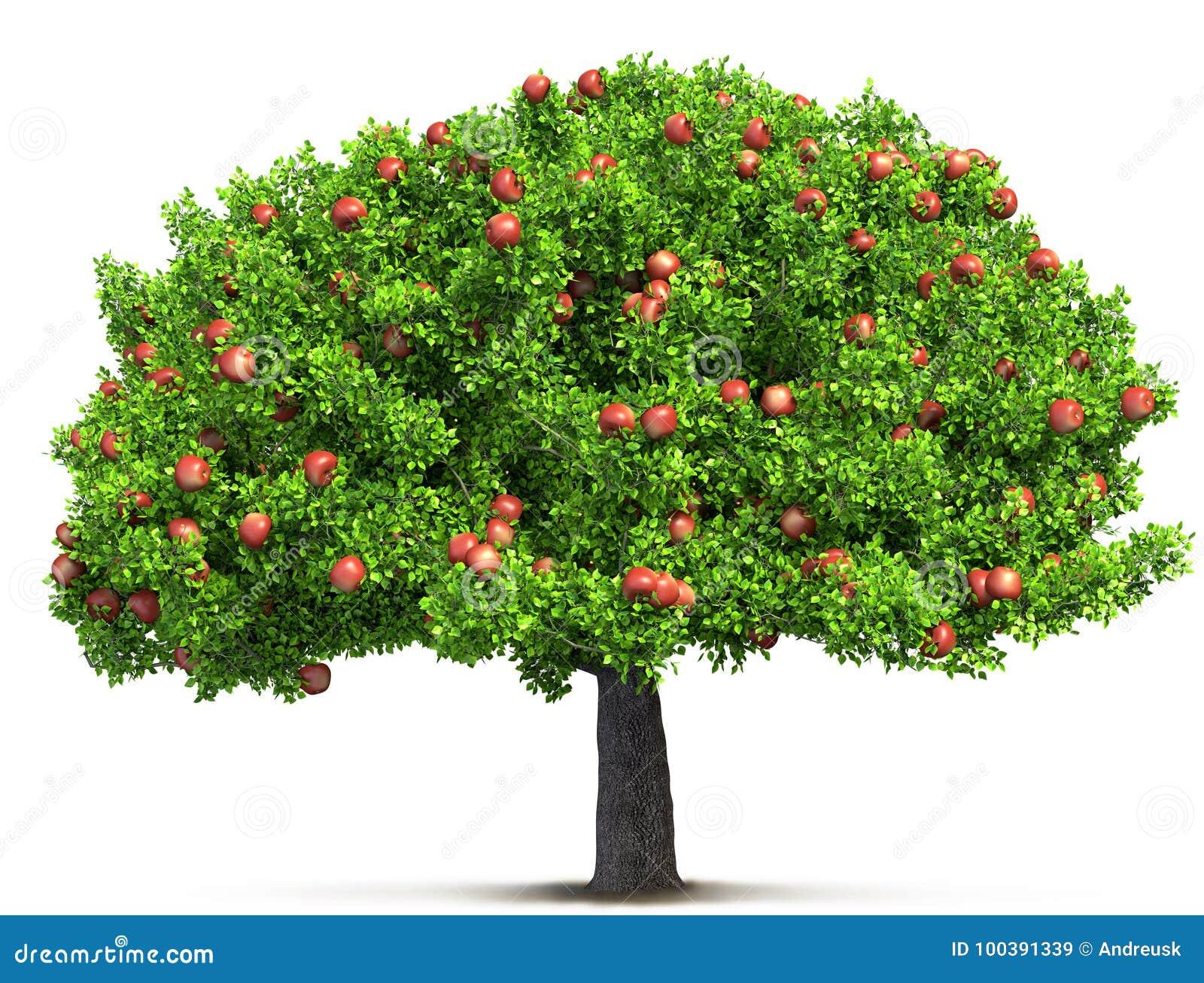 苹果红色射击结构树垂直