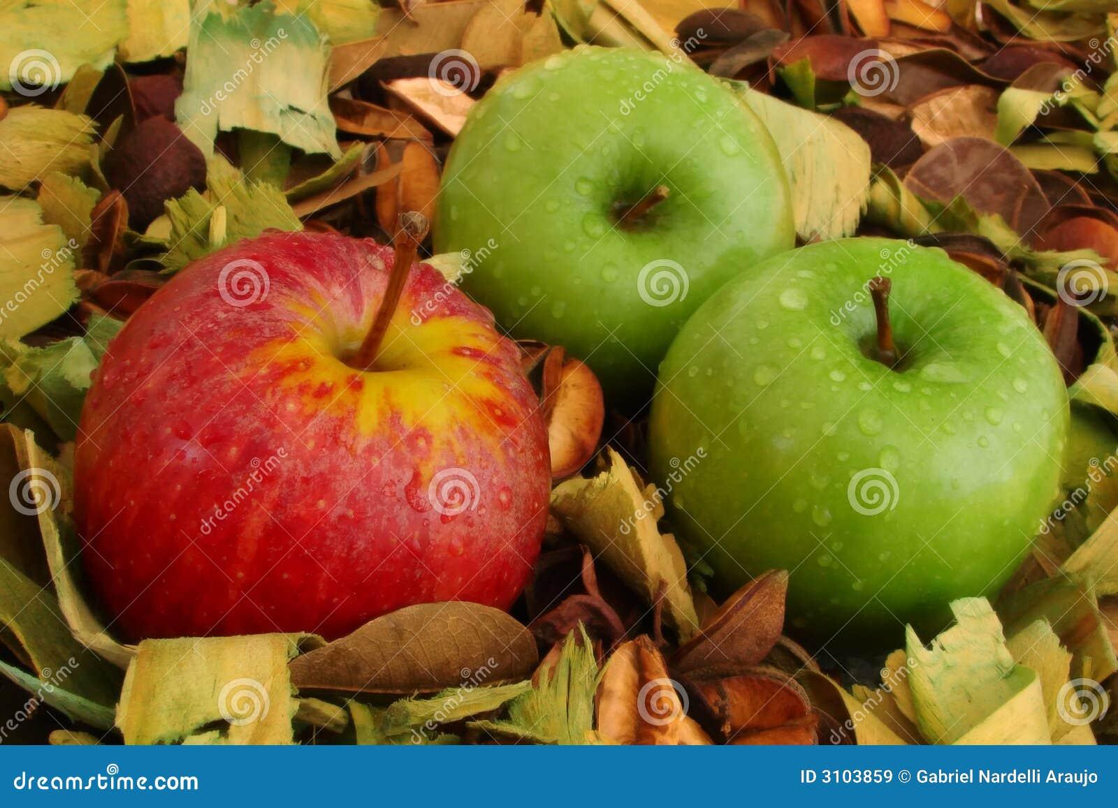 苹果绿色红色