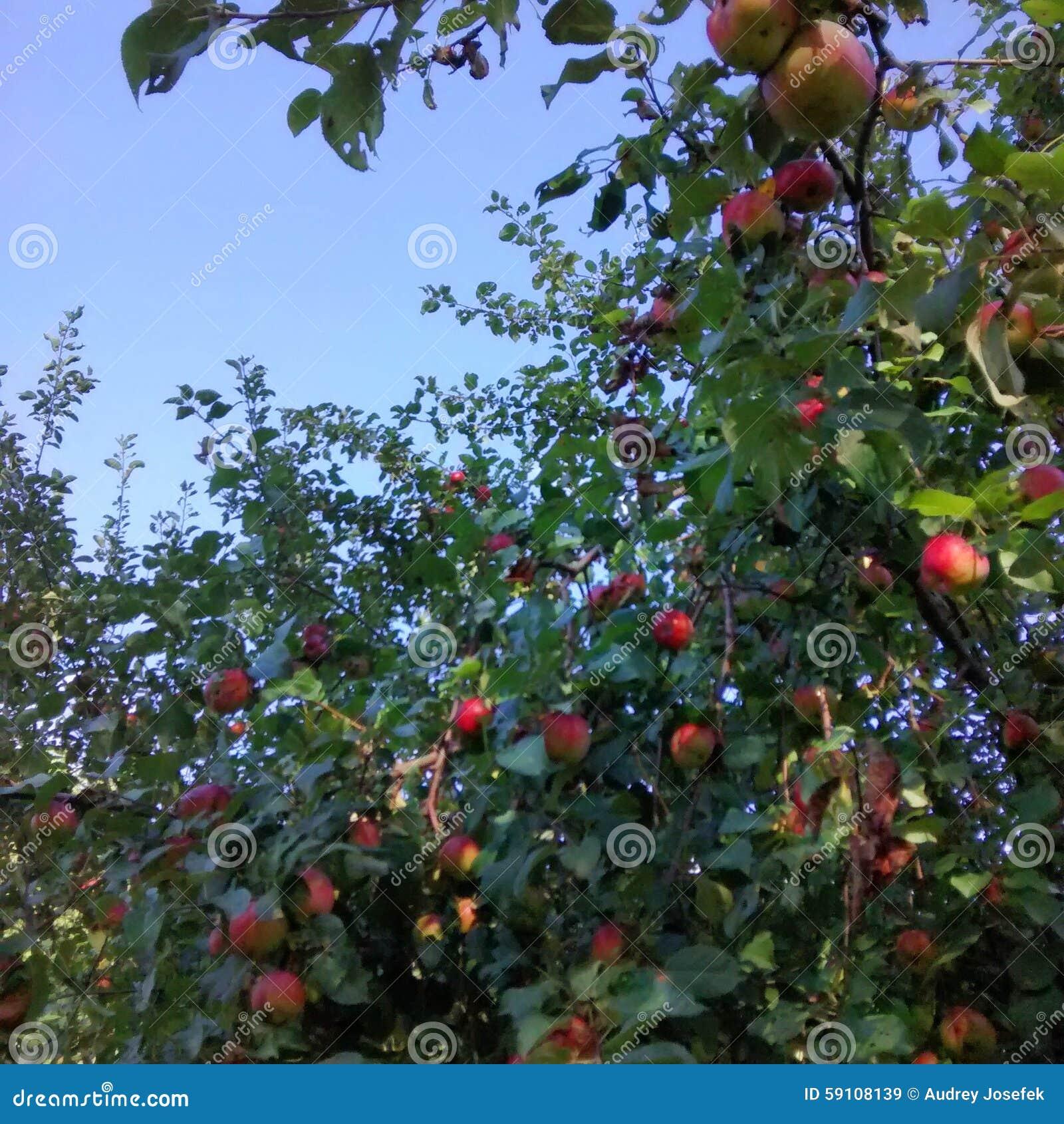 苹果美好的例证结构树向量