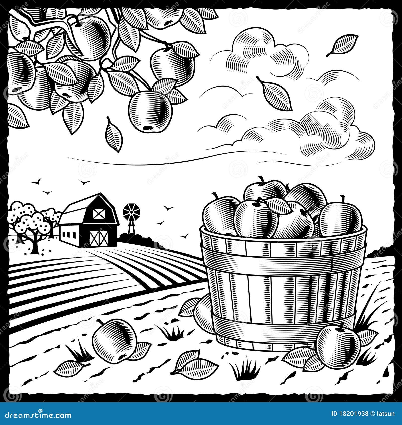 苹果黑色收获横向白色