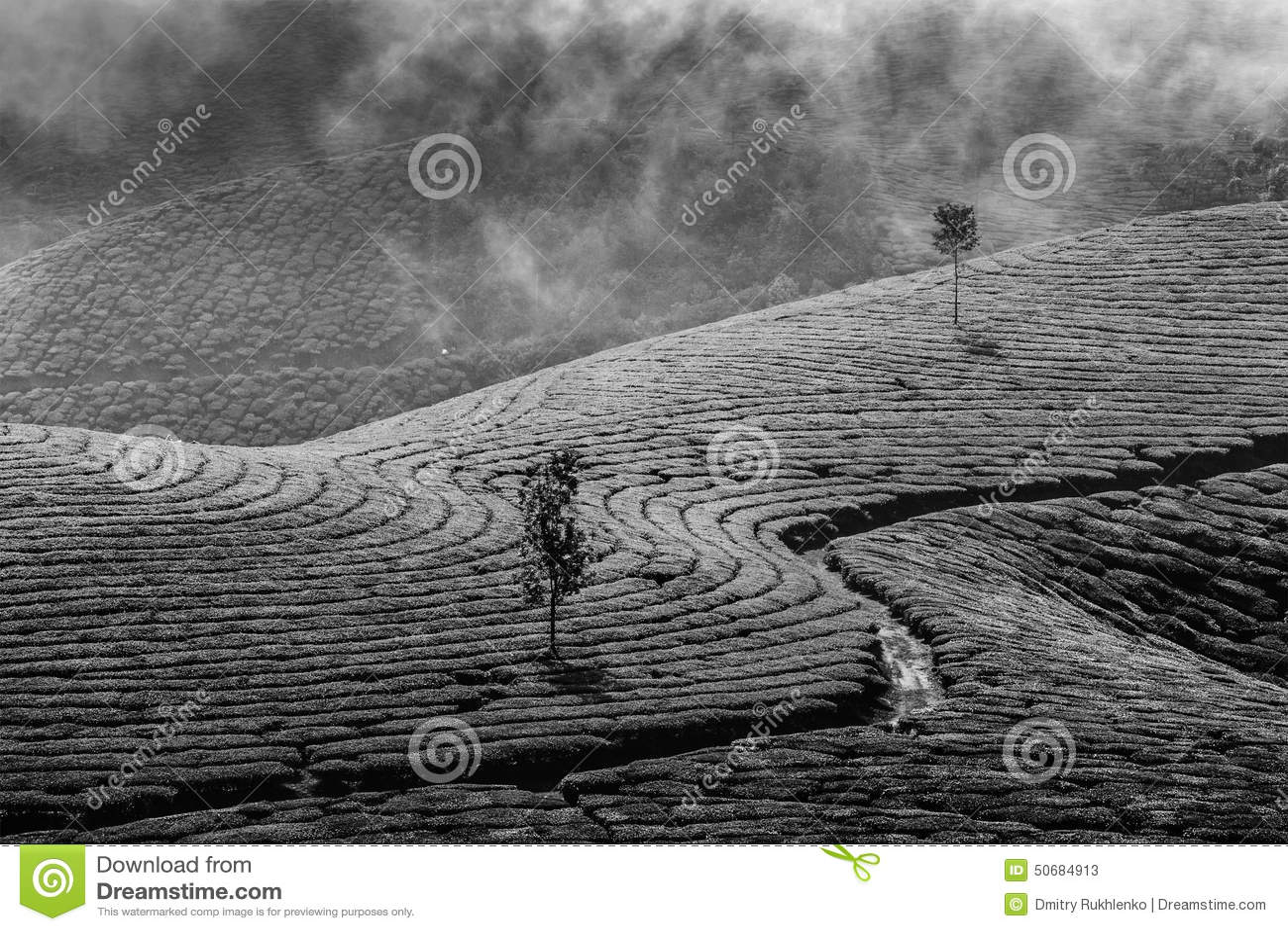 Download 绿茶种植园在Munnar,喀拉拉,印度 库存图片. 图片 包括有 结构树, 外面, 农村, 艺术性, 小山 - 50684913