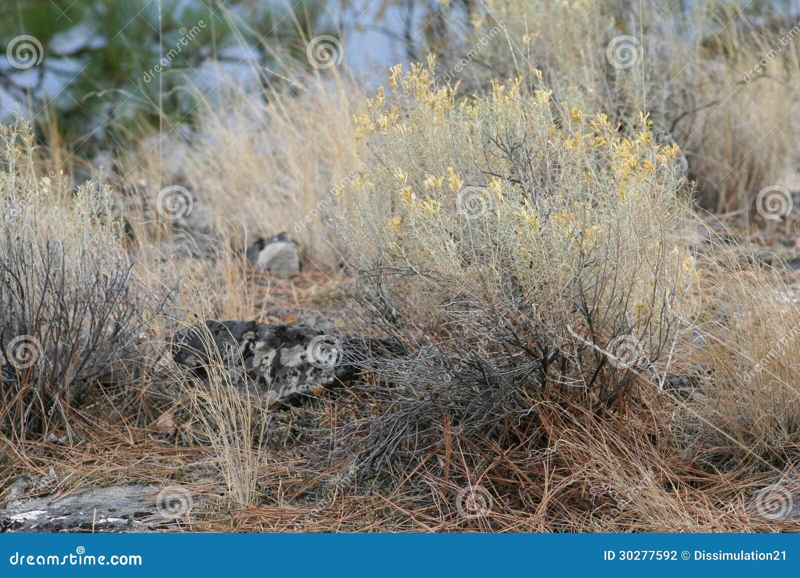 草原,一枝黄