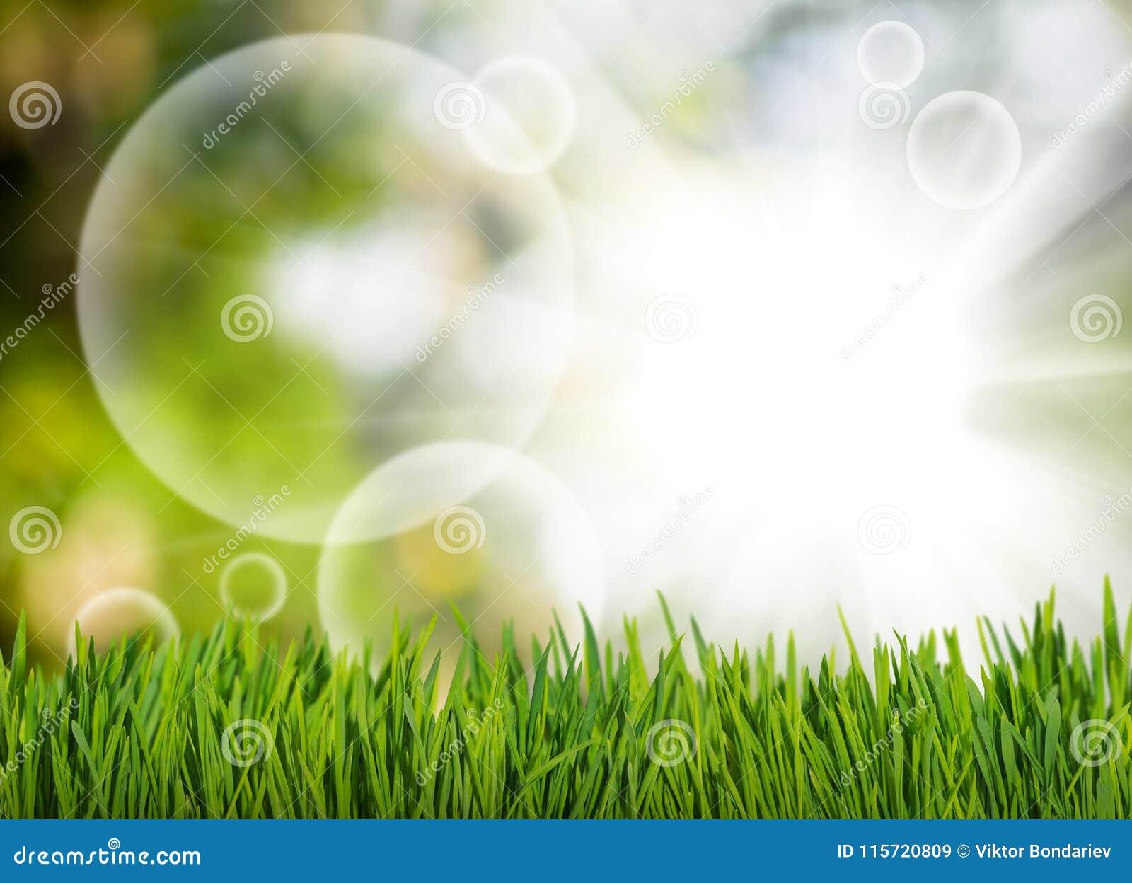 草和抽象泡影在绿色的庭院弄脏了背景