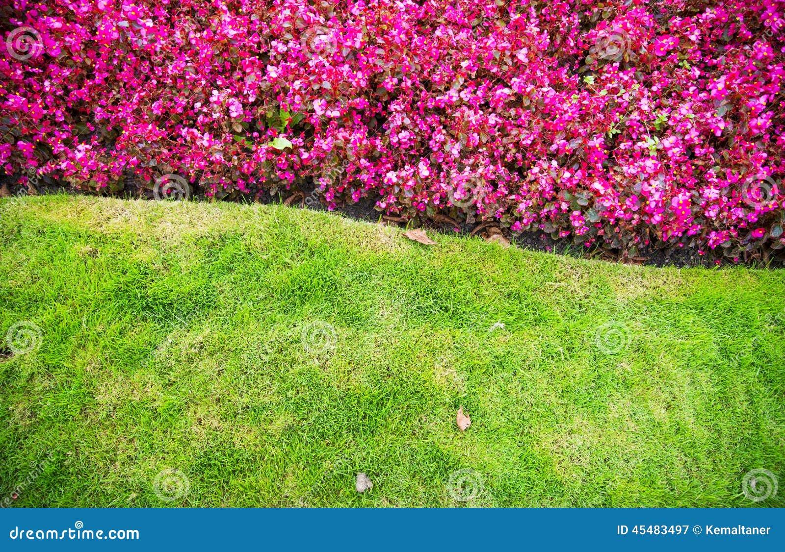草和花背景