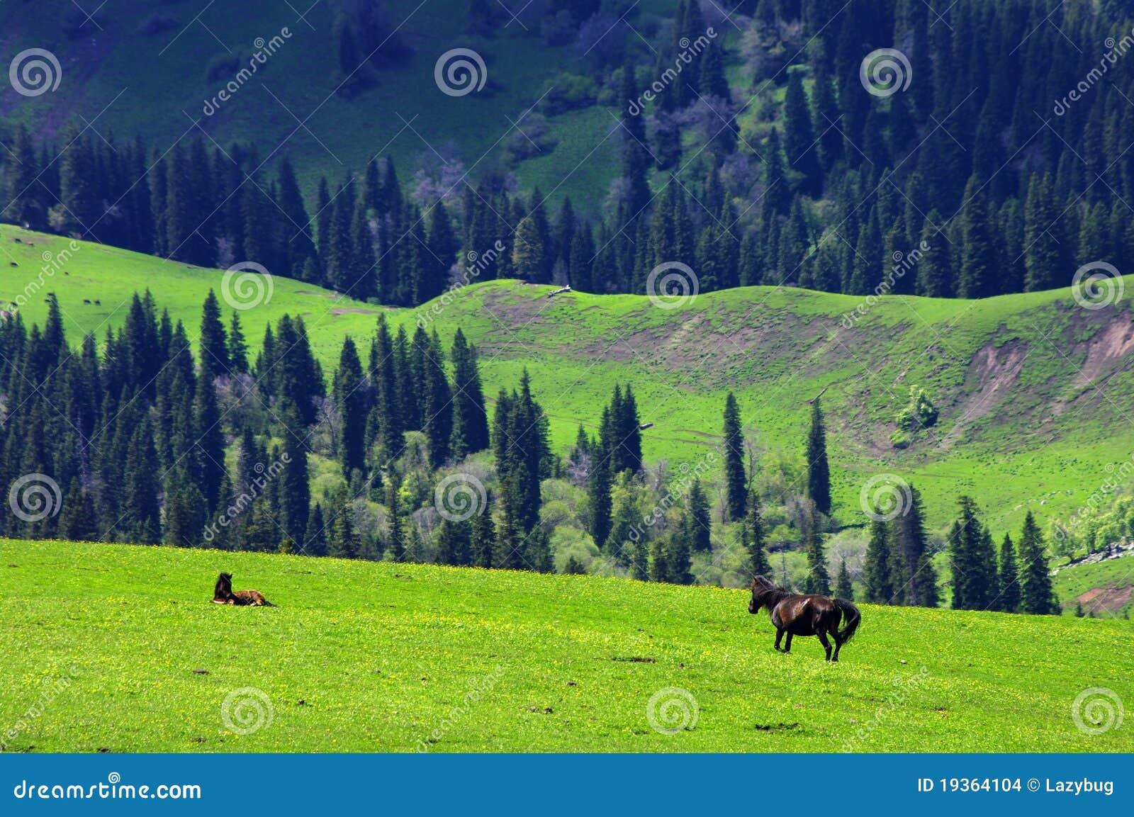 草地产新疆