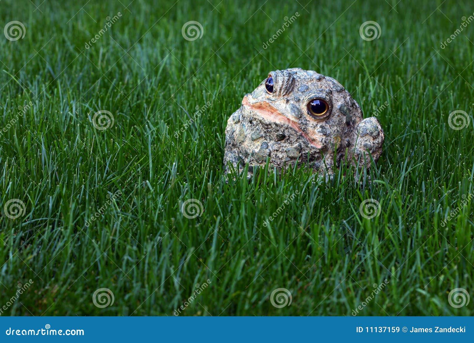 草坐的蟾蜍
