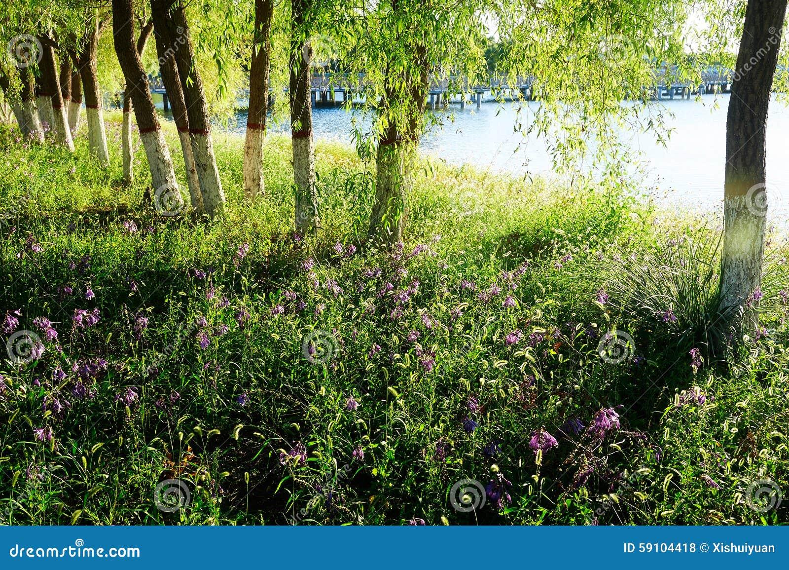 草树和厚实的成长