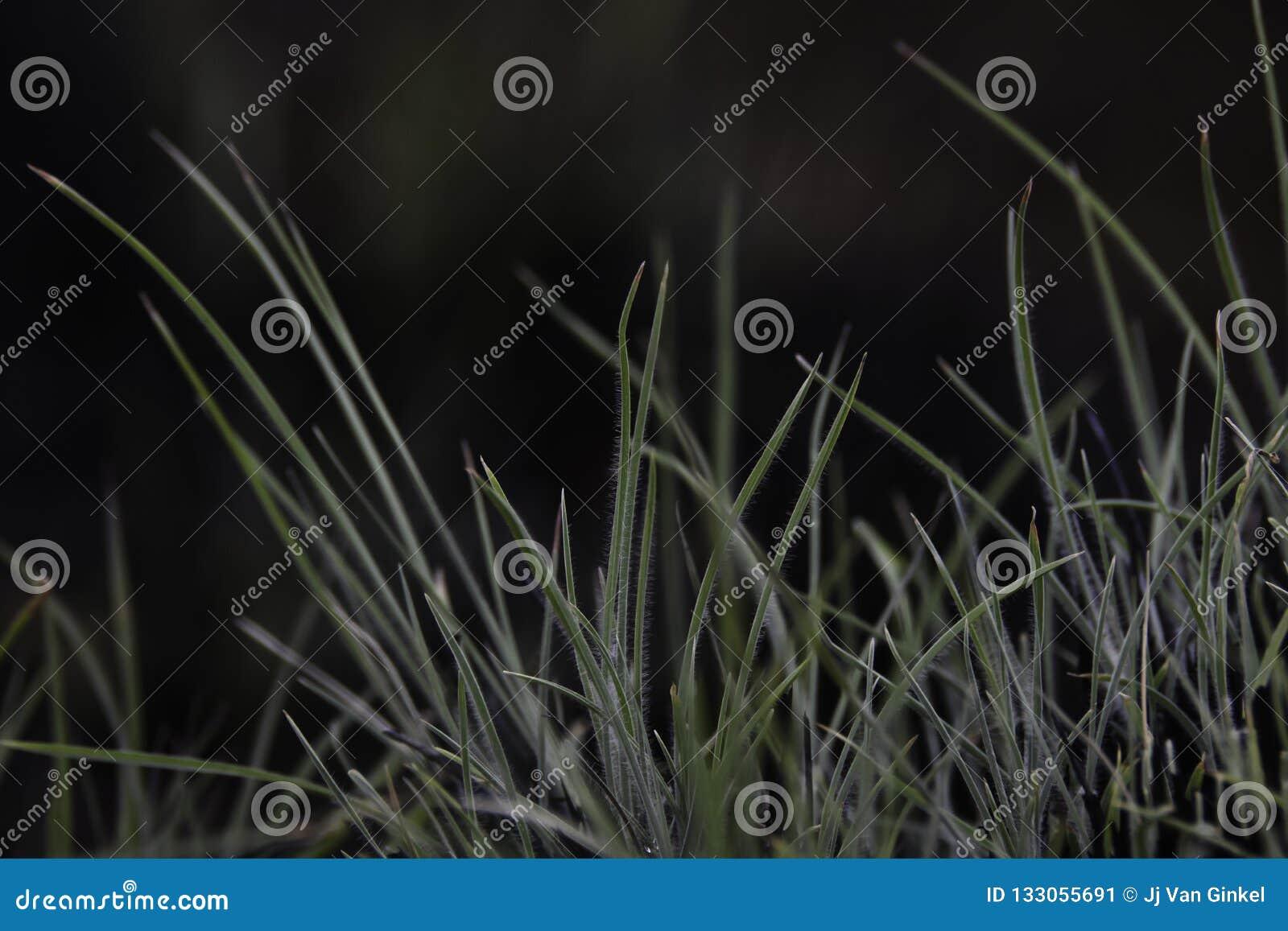 草涌现从被烧的丛的叶片