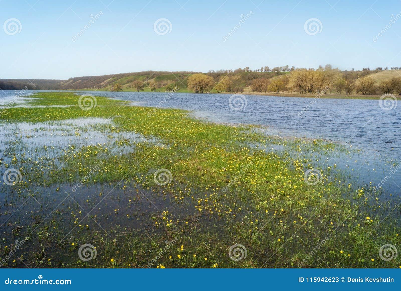 草甸和牧场地多小山谷的充斥了与春天河小河 花在水中间的海岛小岛