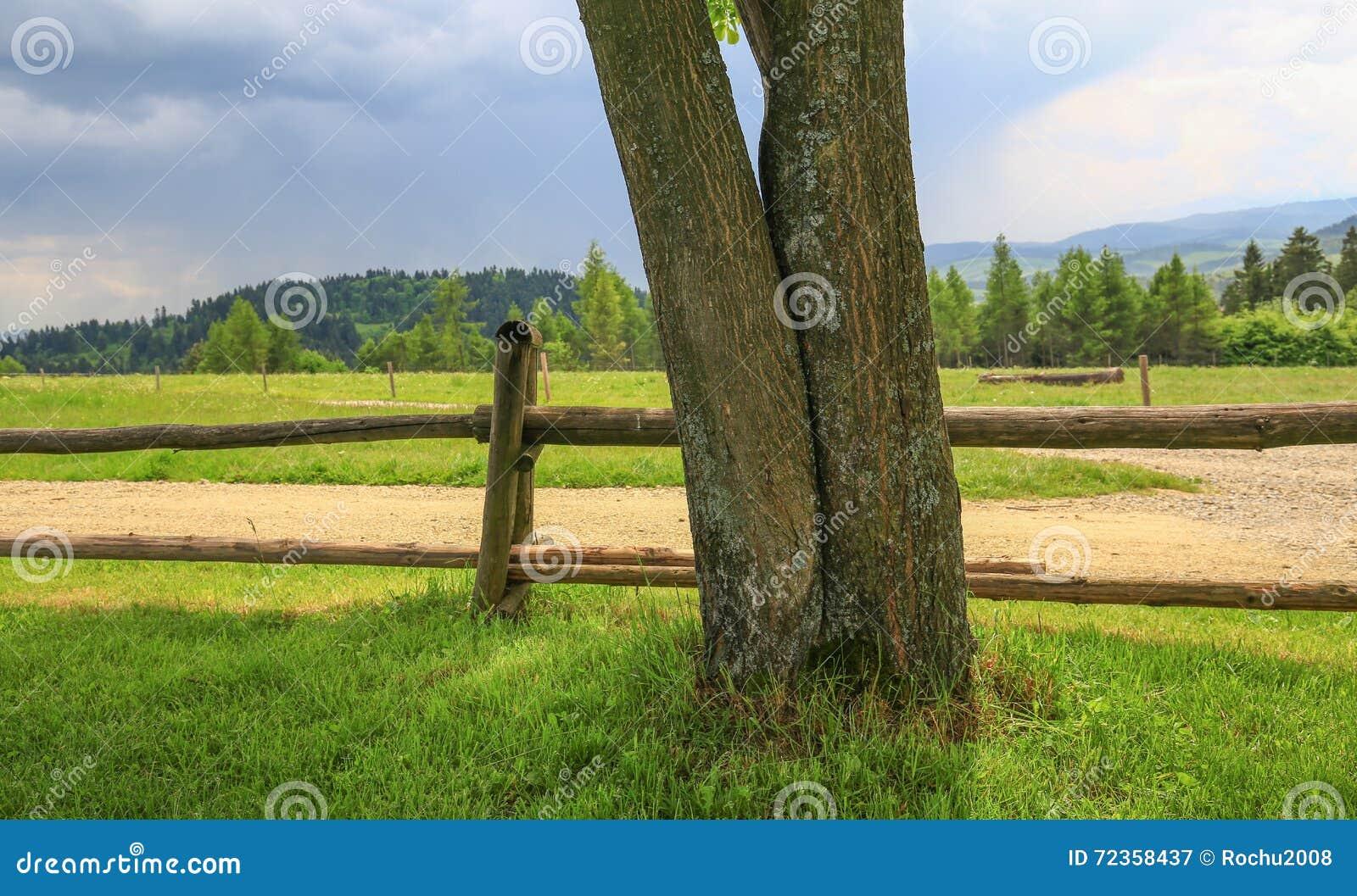 草甸/风景的风景看法
