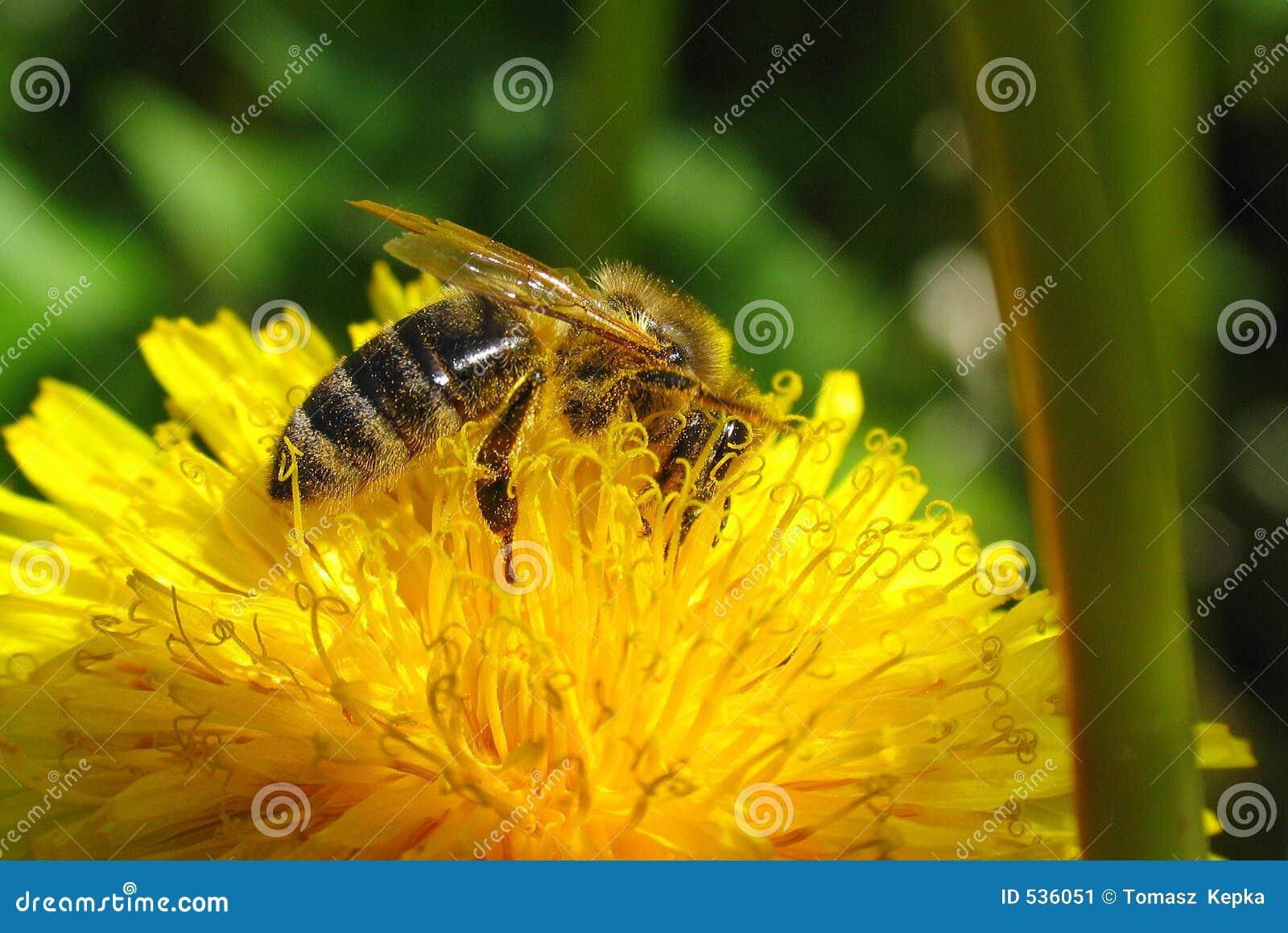 Download 草甸 库存图片. 图片 包括有 本质, 寻呼机, 草甸, 昆虫, 蜂蜜, 夏天, 花蜜 - 536051