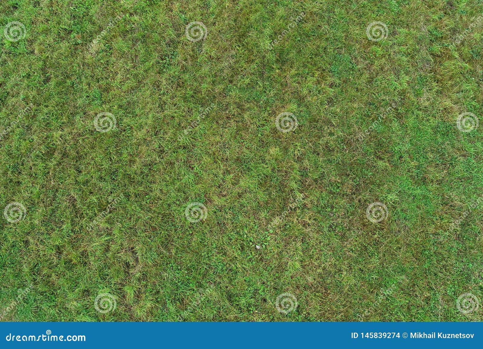草的真正的绿色纹理背景